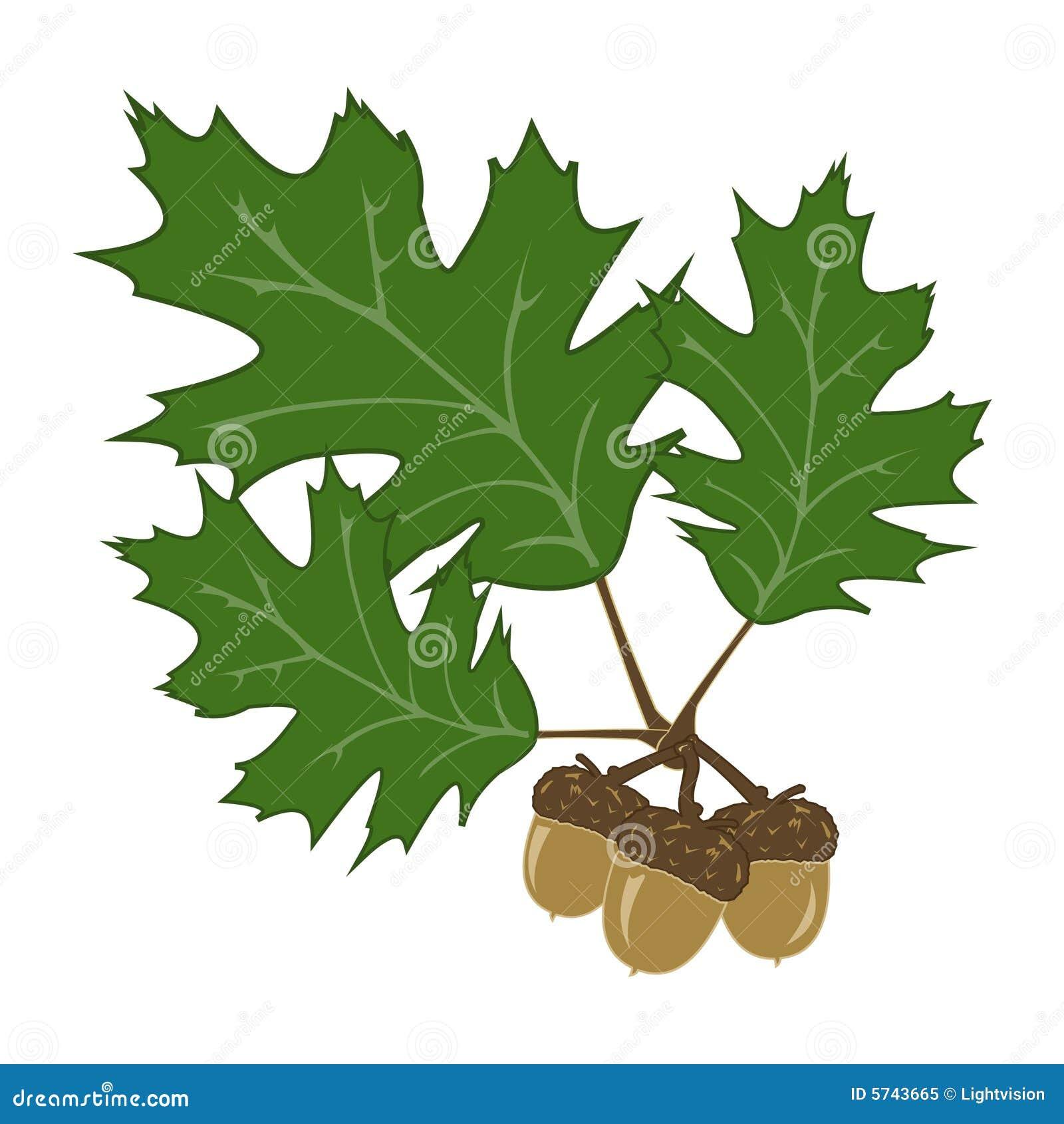 Acorn And Leaf Illustration Royalty Free Stock Photo