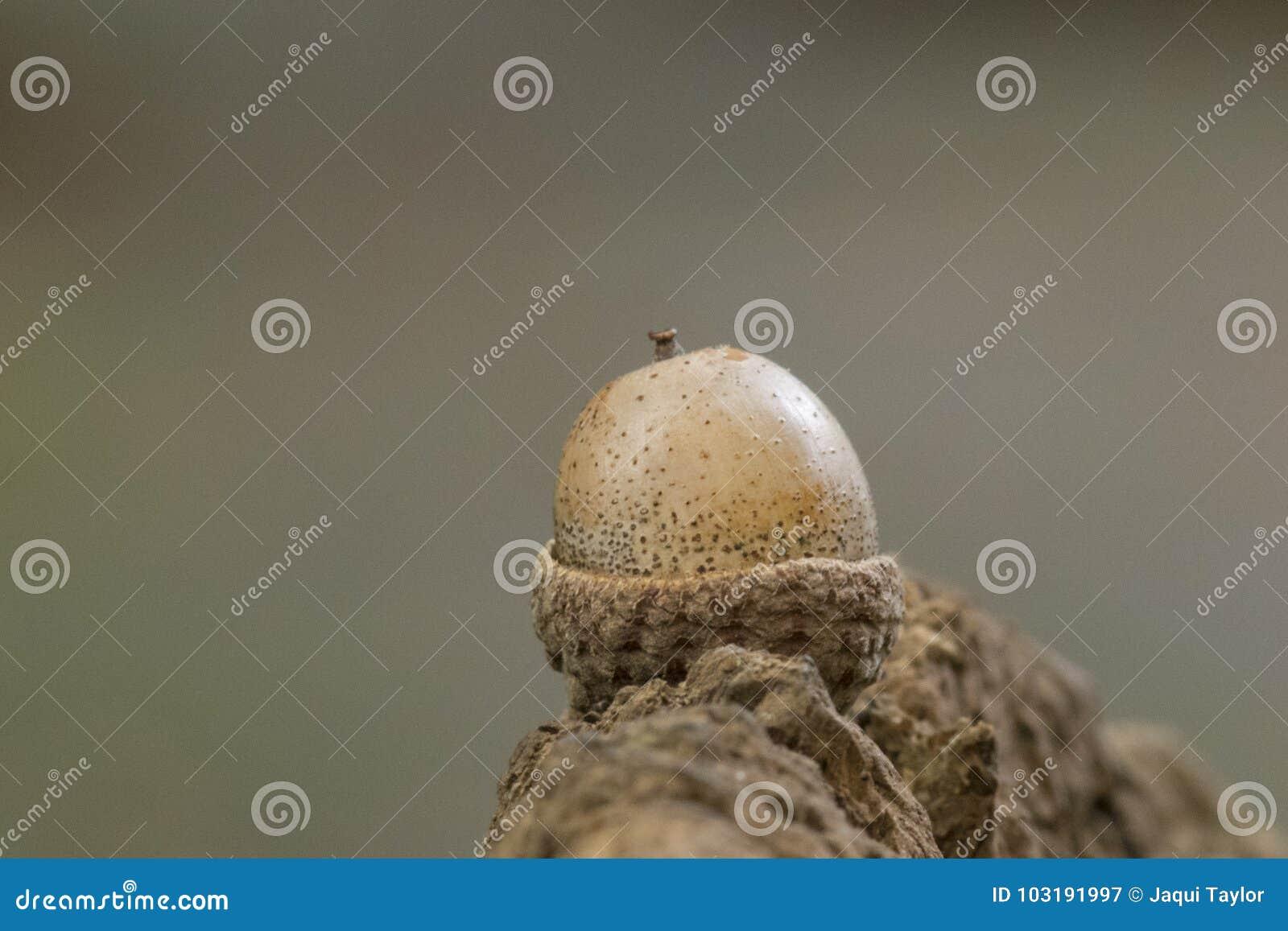 An acorn on a log
