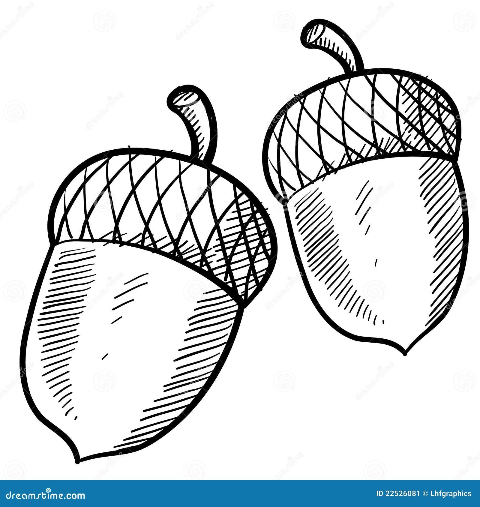 Acorn Sketch Stock Image Image 22526081