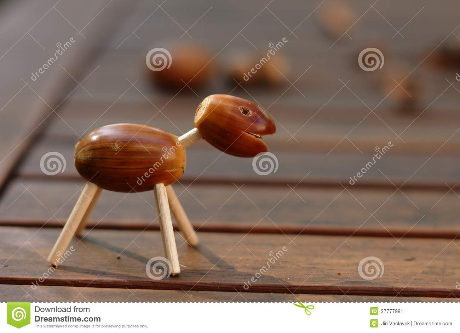 Acorn zwierzę