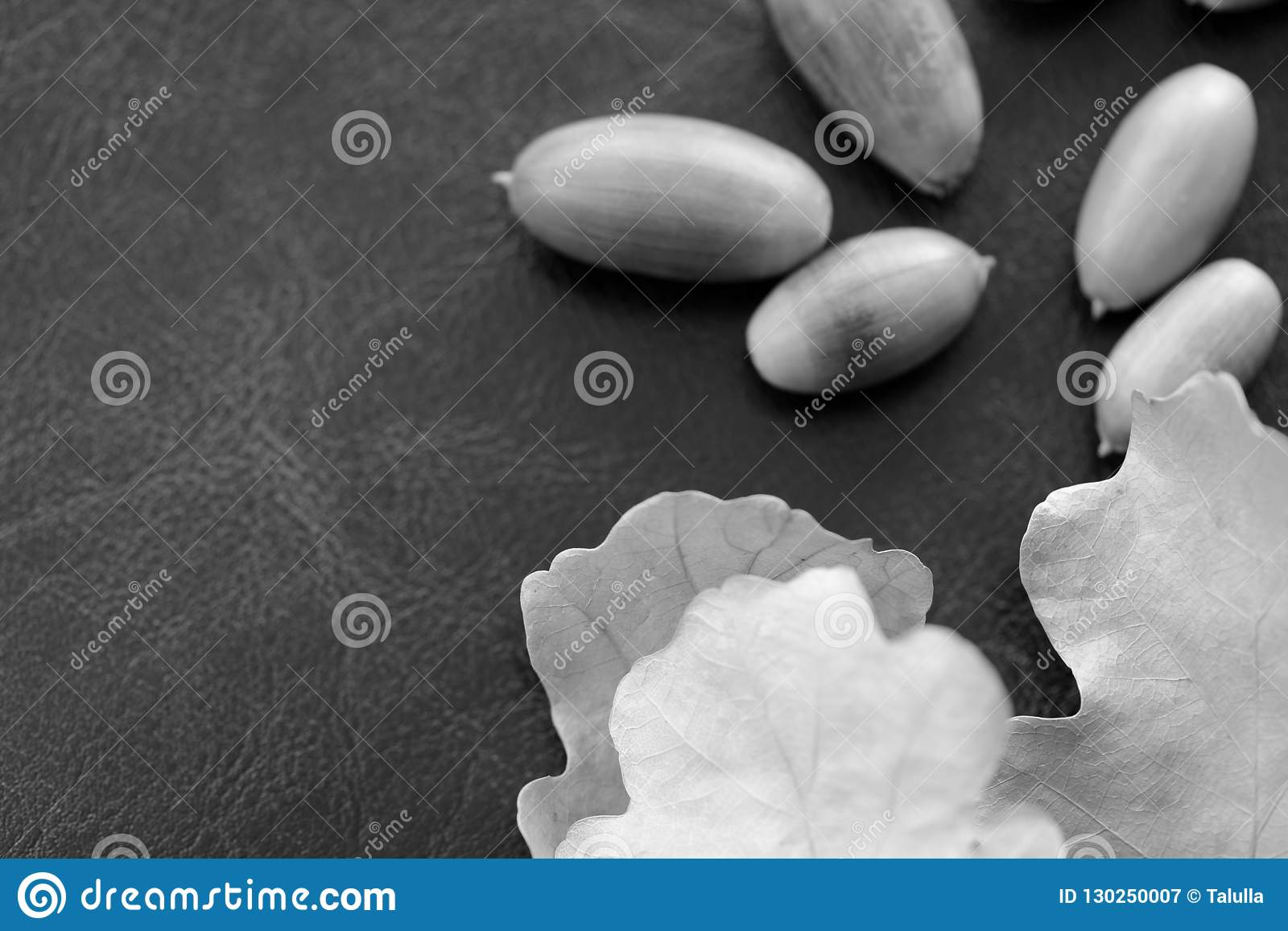 Acorns And Dry Oak Leaves On A Dark Background Black And