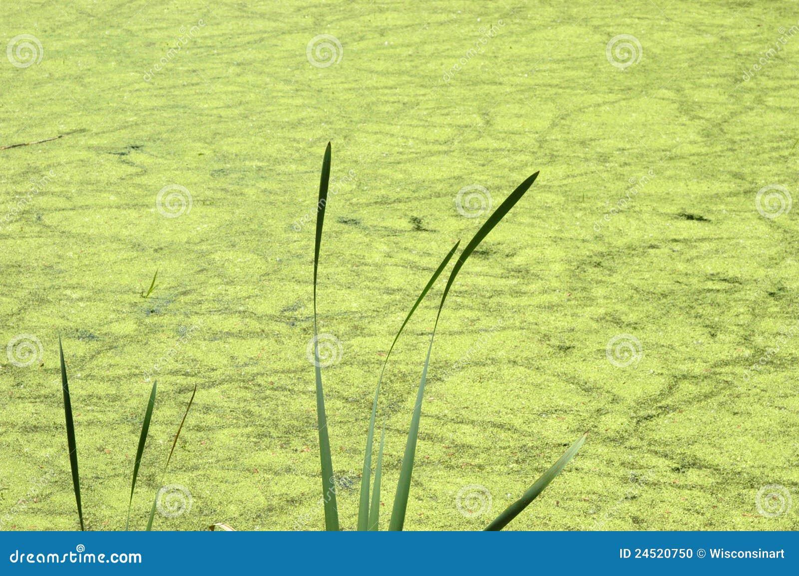 Acqua astratta della palude dello stagno della priorità bassa della natura, alghe