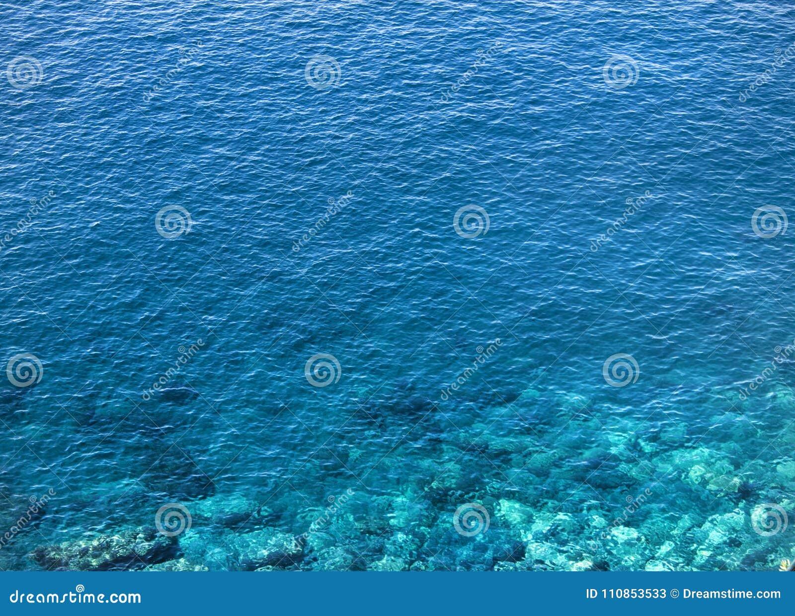 Acqua blu cristallina dell oceano Chiuda sul colpo con le luci molto piacevoli e sul corallo che mostra sotto la superficie Envir