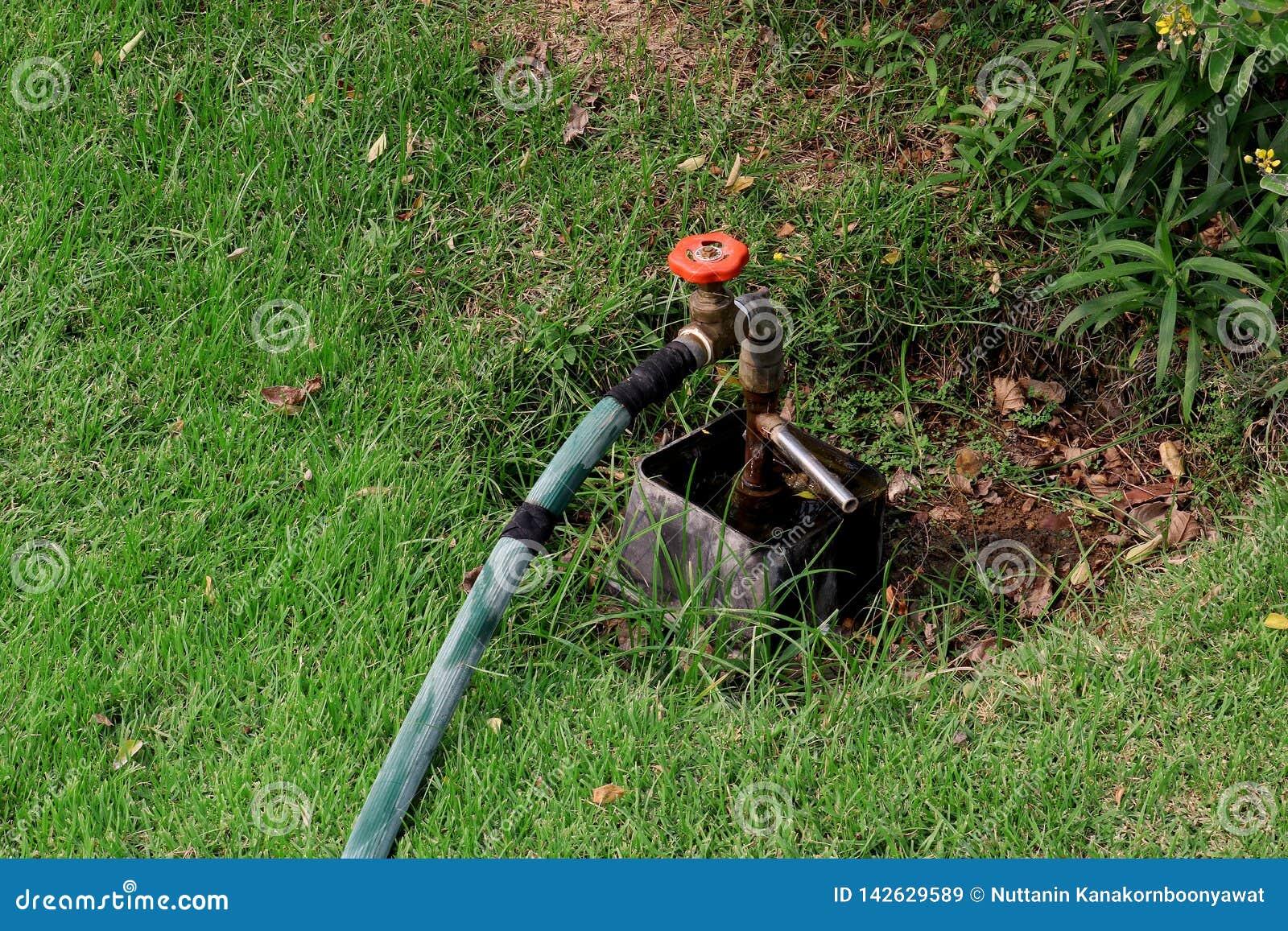Acqua del rubinetto dalla valvola dell acqua del rubinetto, valvola a saracinesca nel giardino verde