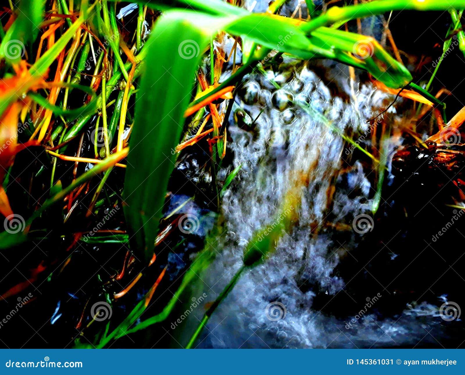 Acqua e cespugli