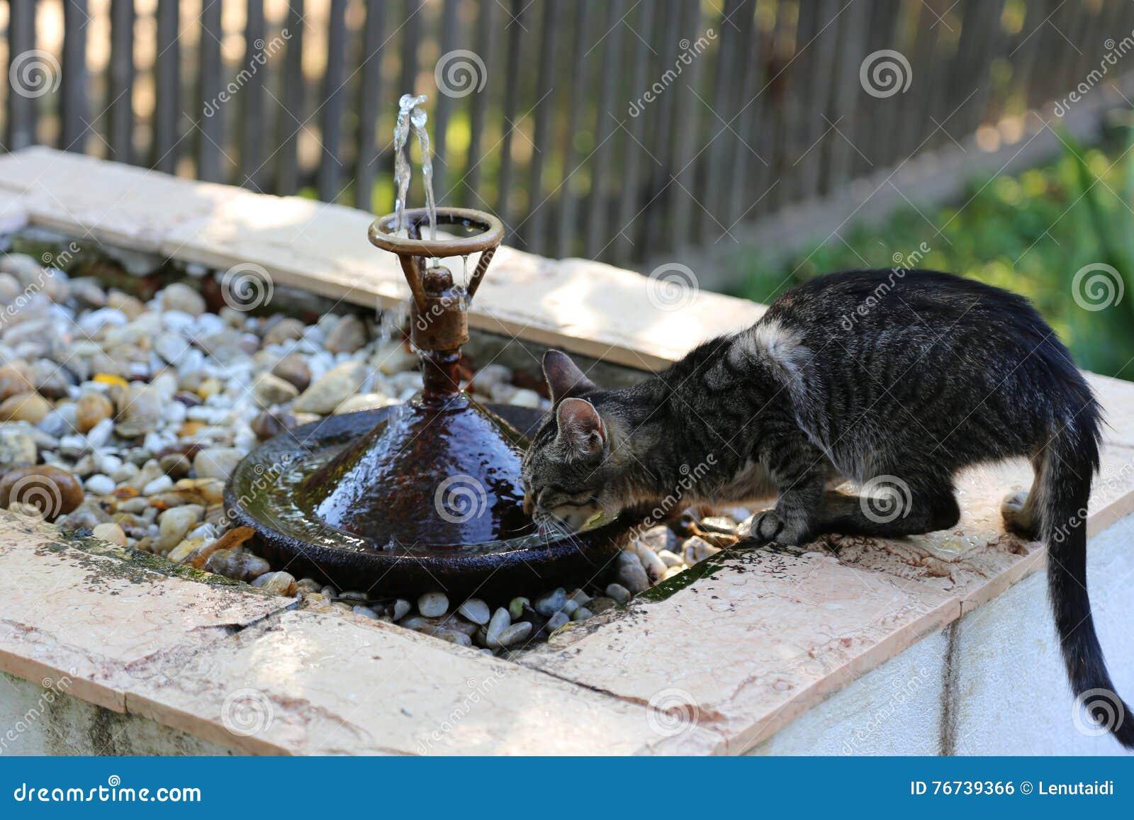 Acqua potabile di Kitty