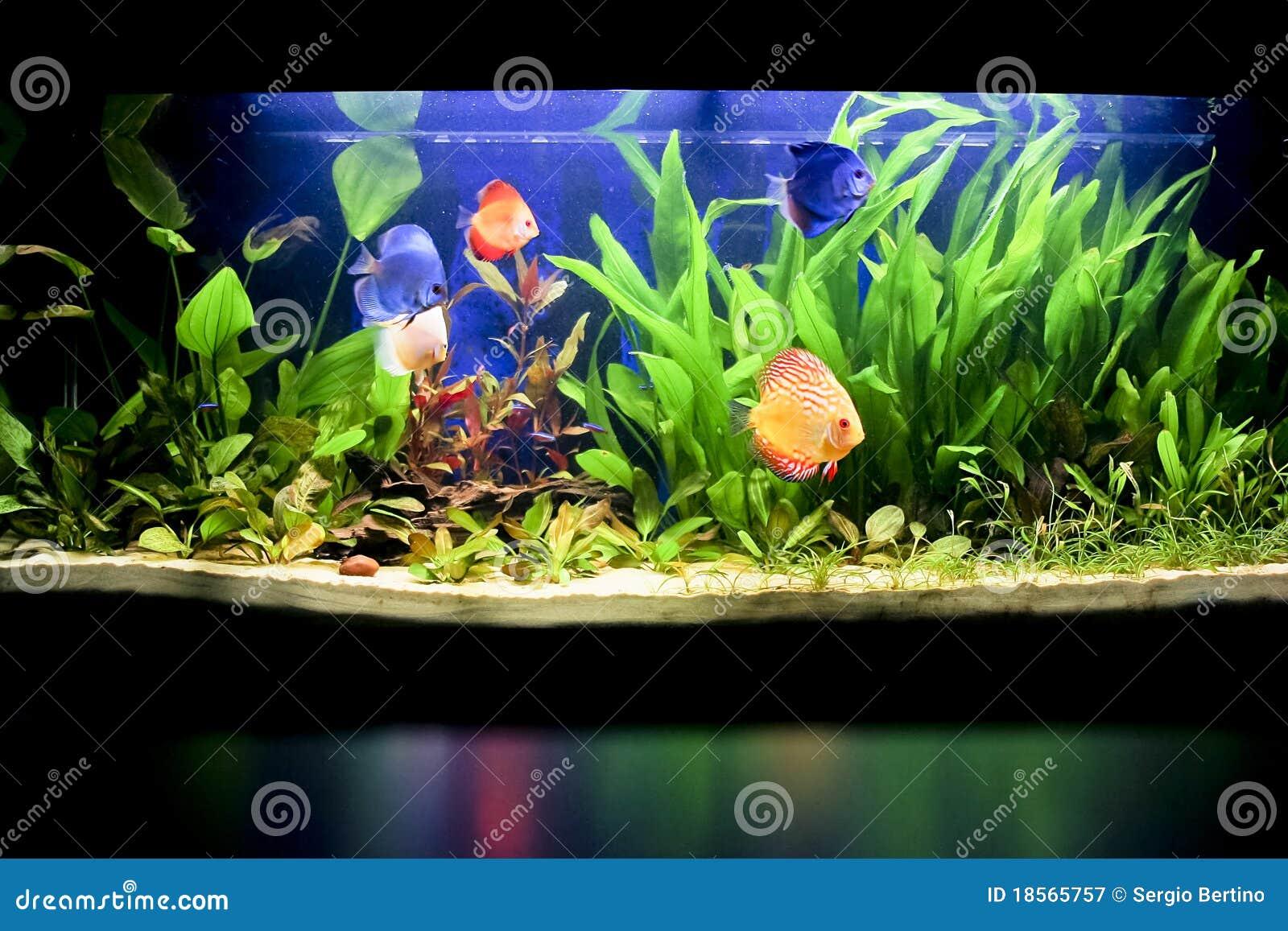 Acquario con alcuni fisches tropicali fotografia stock for Acquario prezzi