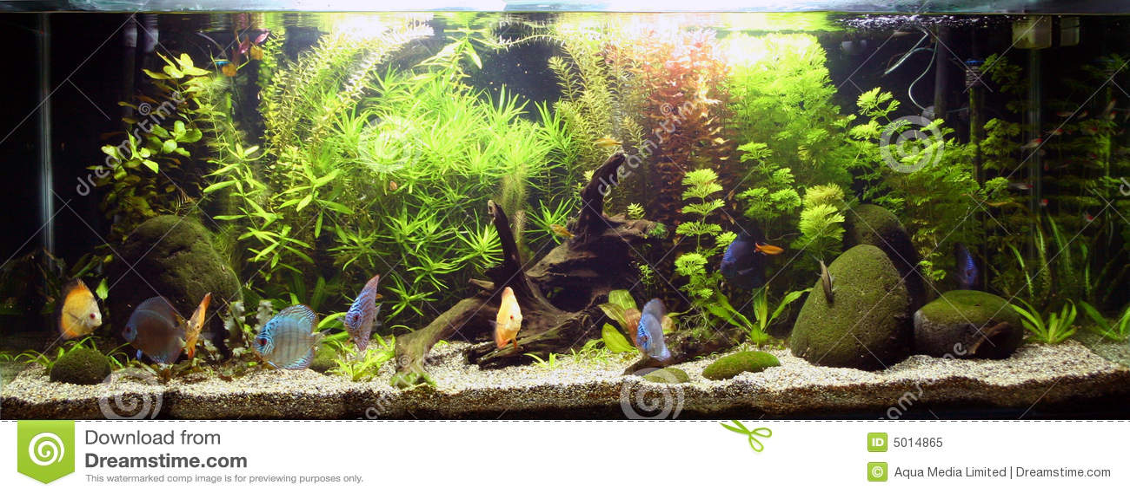 Acquario d 39 acqua dolce tropicale immagine stock immagine for Acqua acquario
