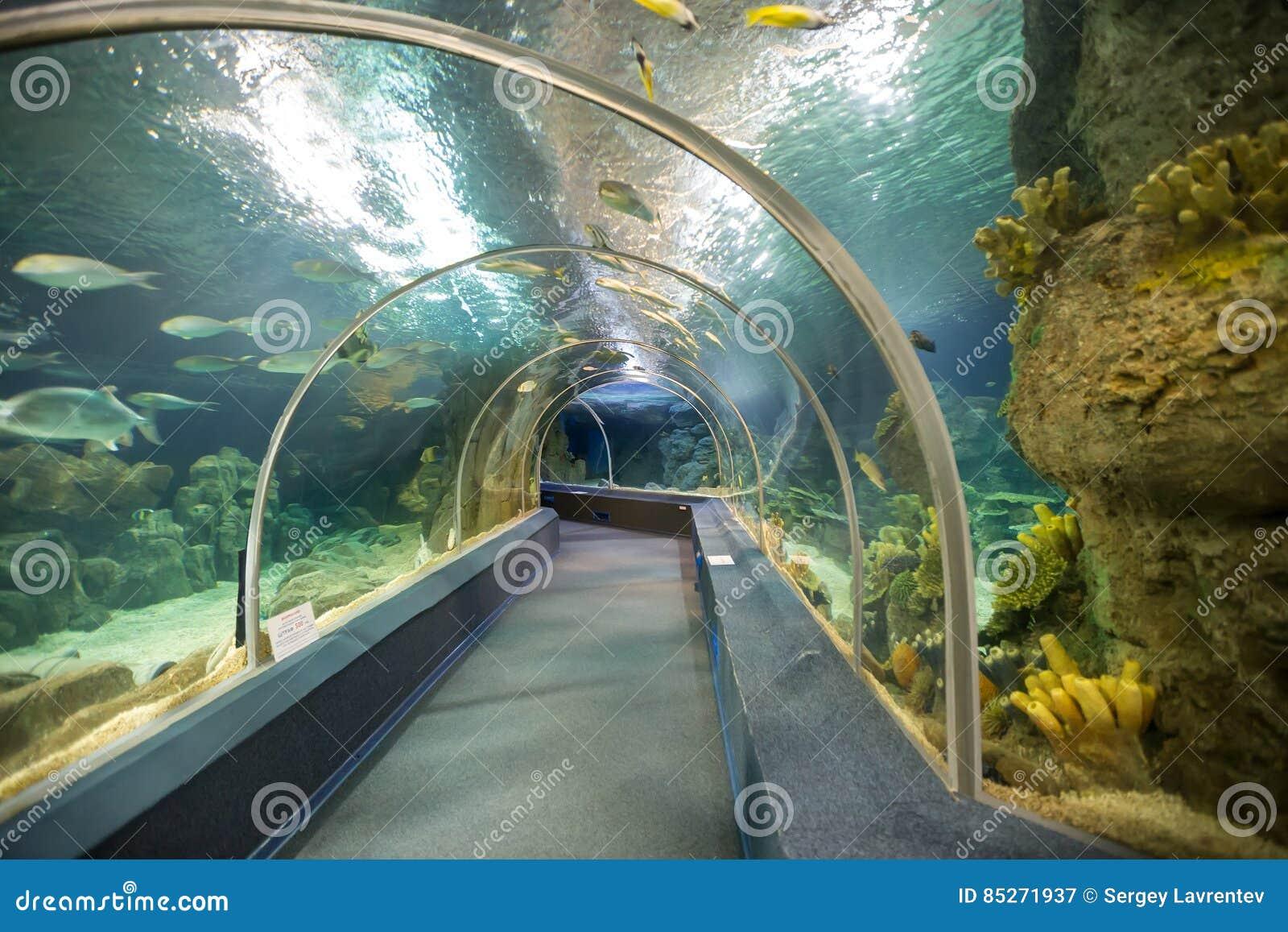 Acquario del mondo di scoperta di Soci La Russia