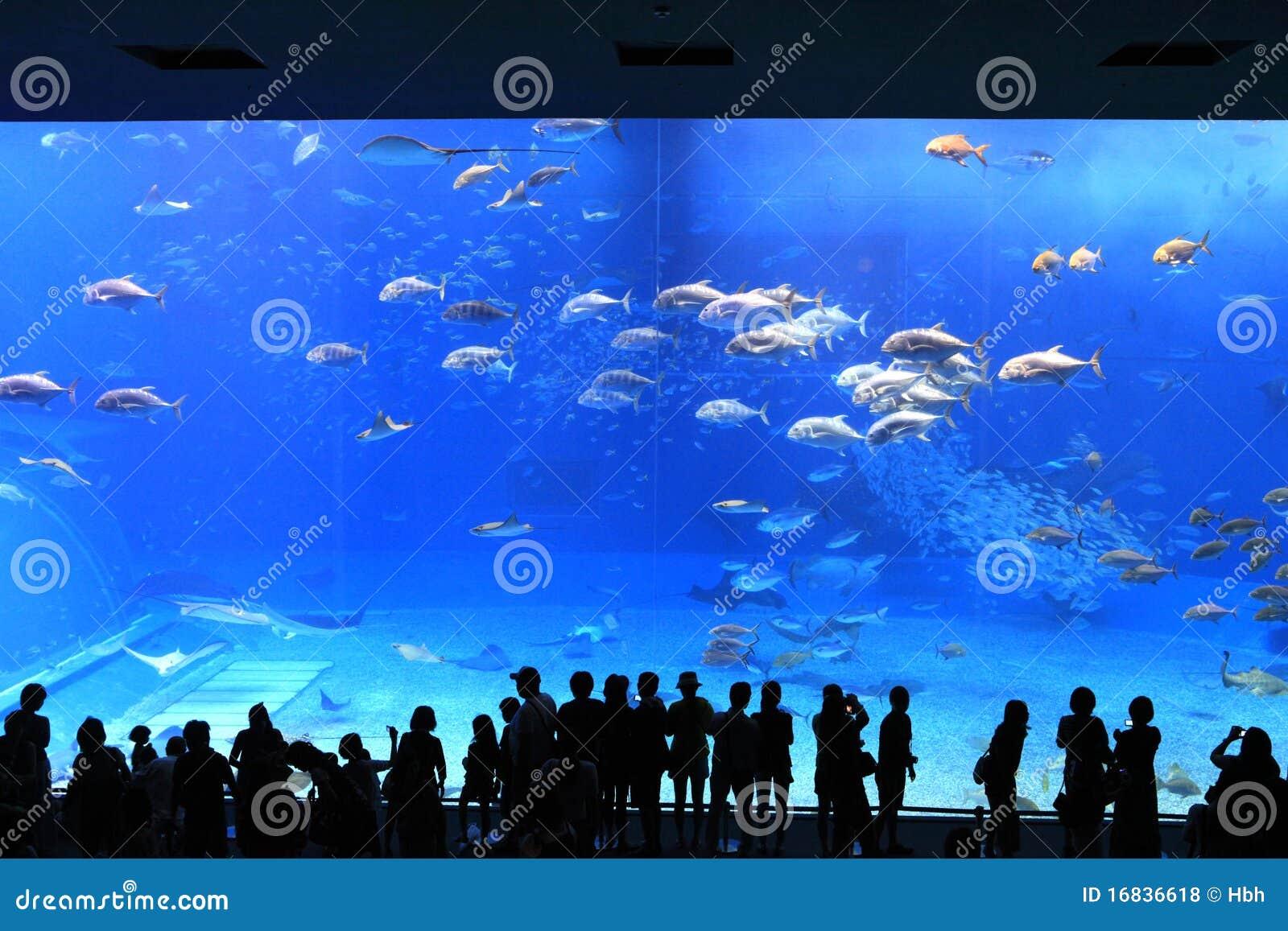 Acquario dell Okinawa