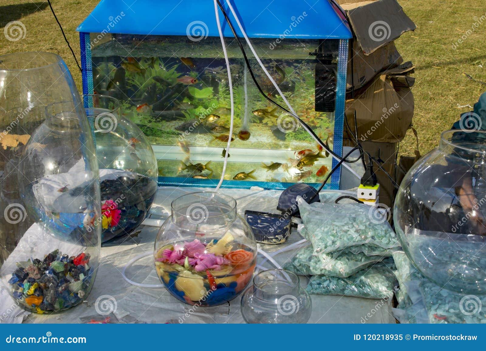 Acquario ed altro accessori del pesce