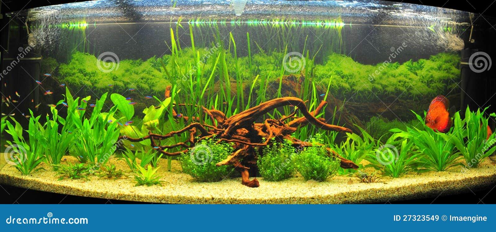 Acquario esotico con i pesci tropicali del discus immagine for Pesci per acquario tropicale