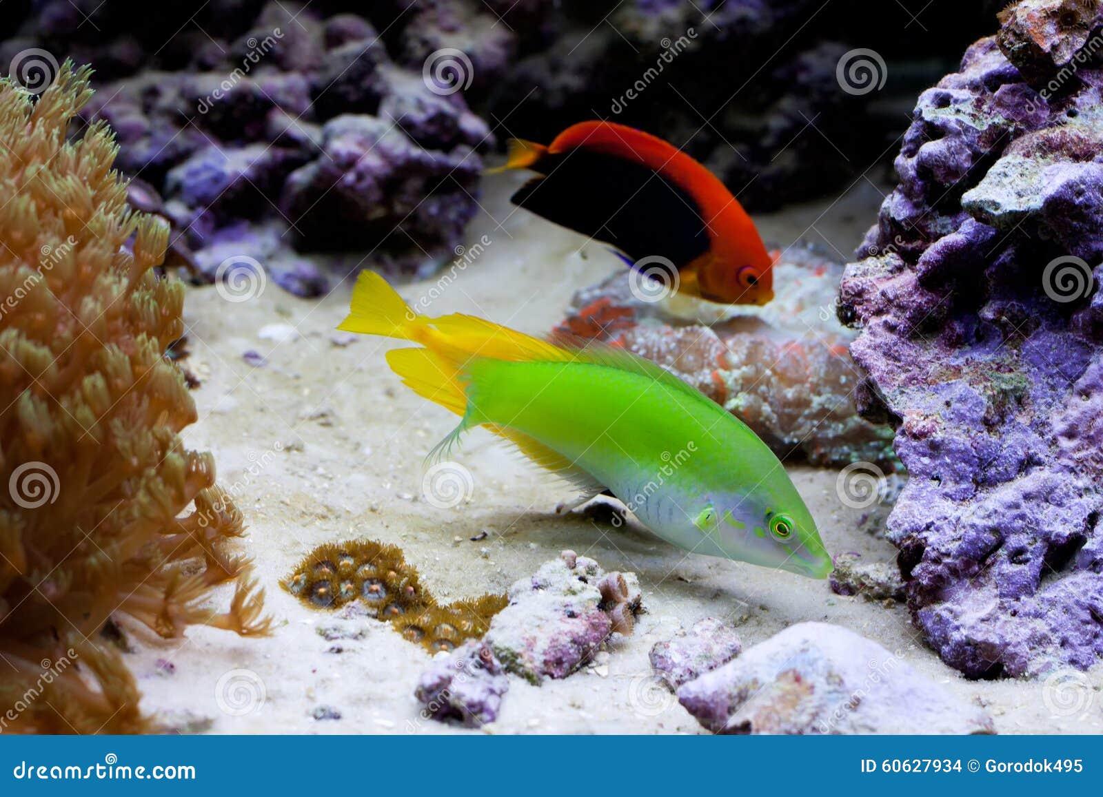 acquario tropicale marino con i pesci variopinti