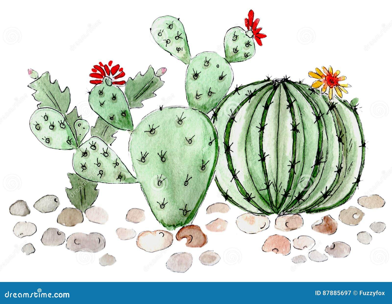 Acquerello dell illustrazione dei succulenti del cactus