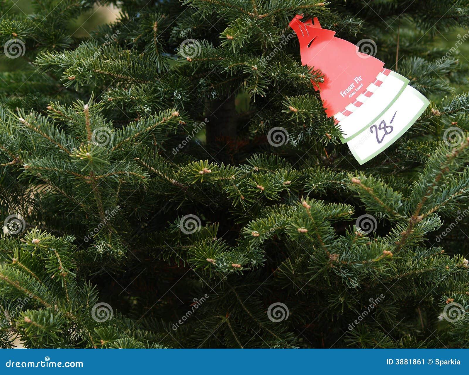 Acquisto dell albero di Natale