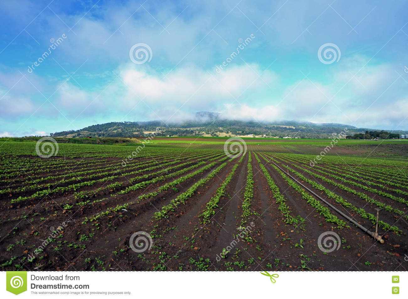 Acres of farming new vegetable crop planting agriculture Australia