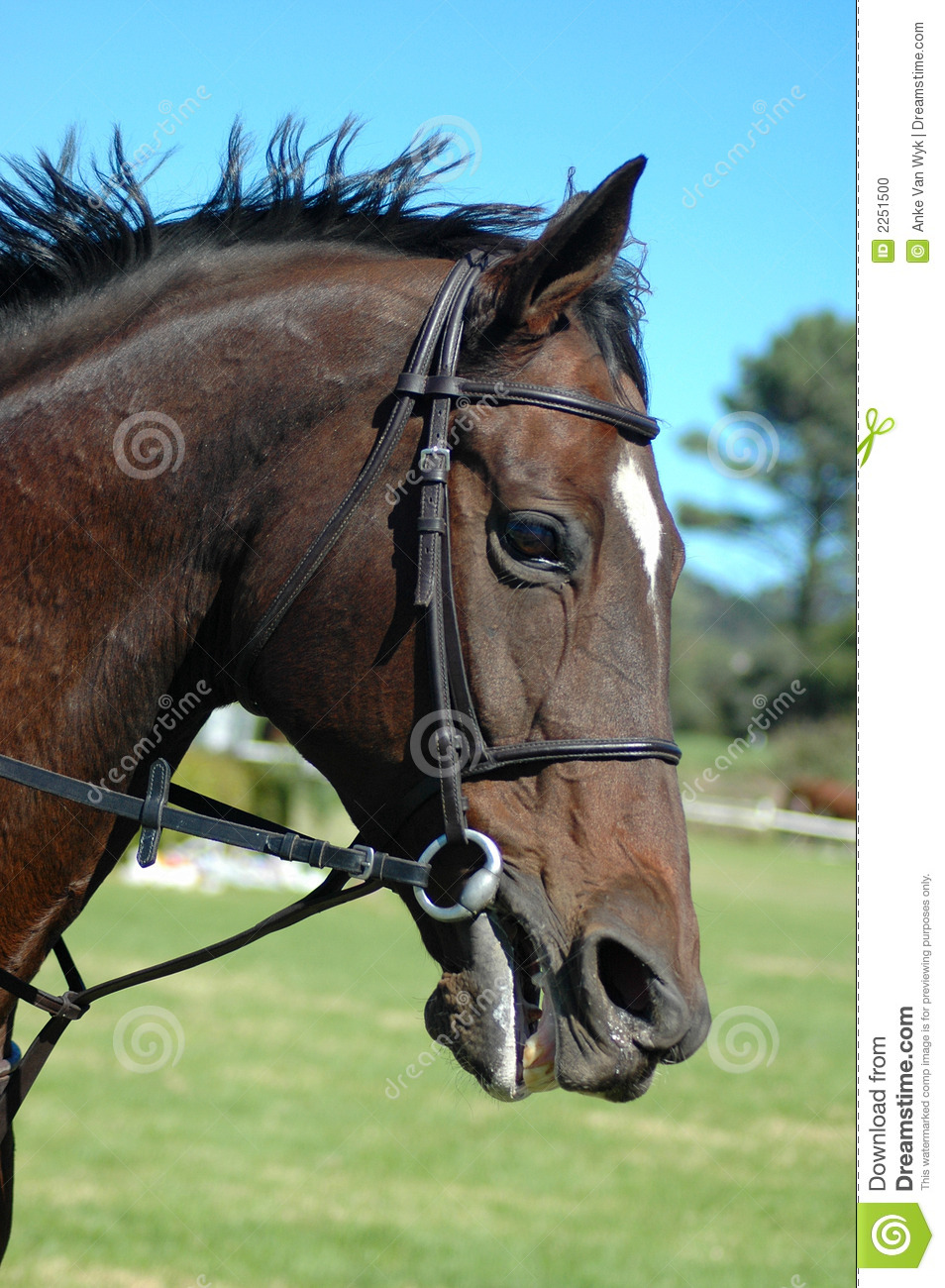 Action Horse Stock Photo Image 2251500