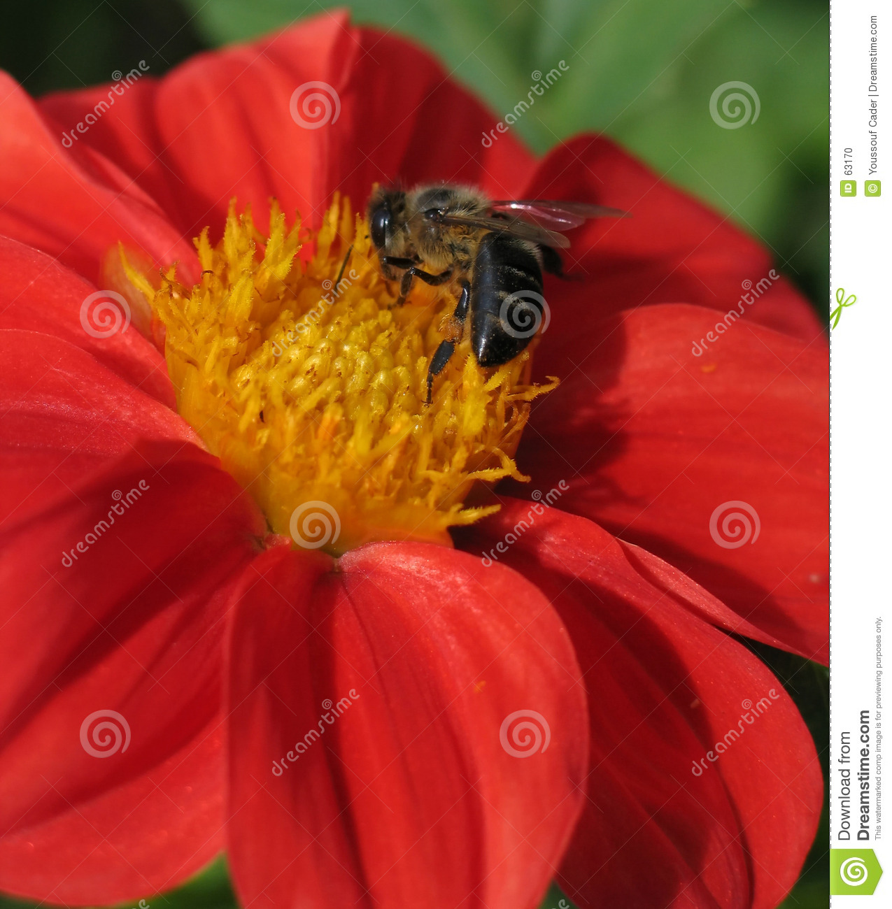 Download Activité d'abeille photo stock. Image du insecte, centre - 63170
