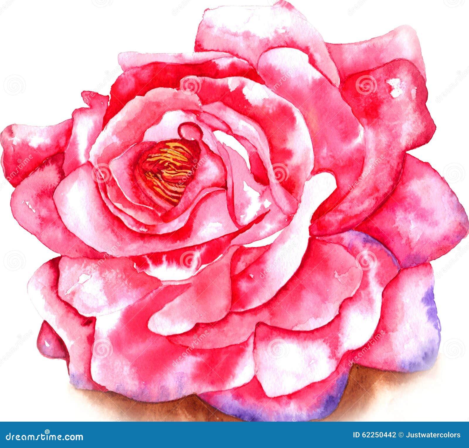 Acuarela de Rose
