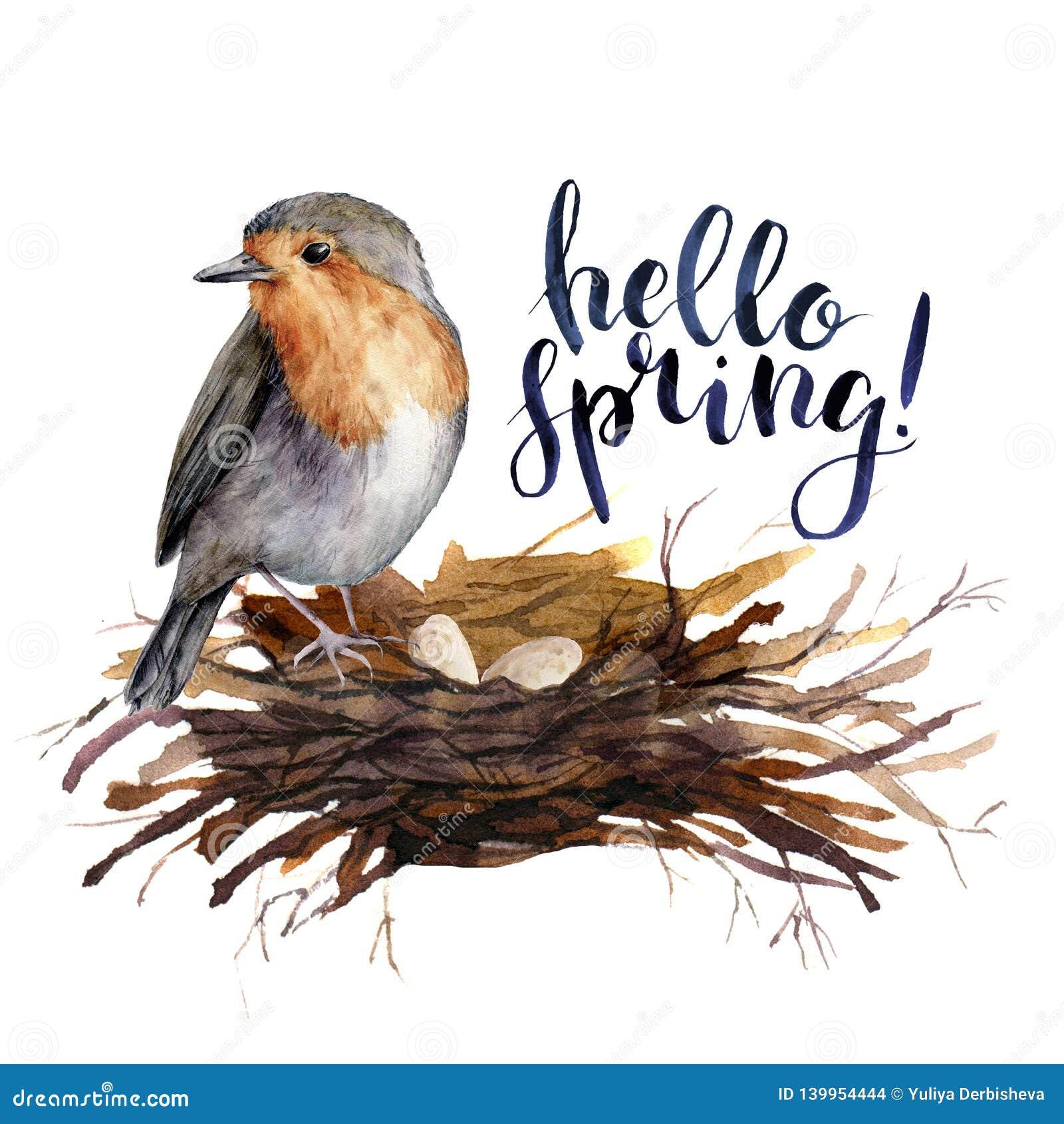 Acuarela que pone letras a la tarjeta del pájaro de la primavera del hola Ejemplo pintado a mano con el petirrojo en la jerarquía