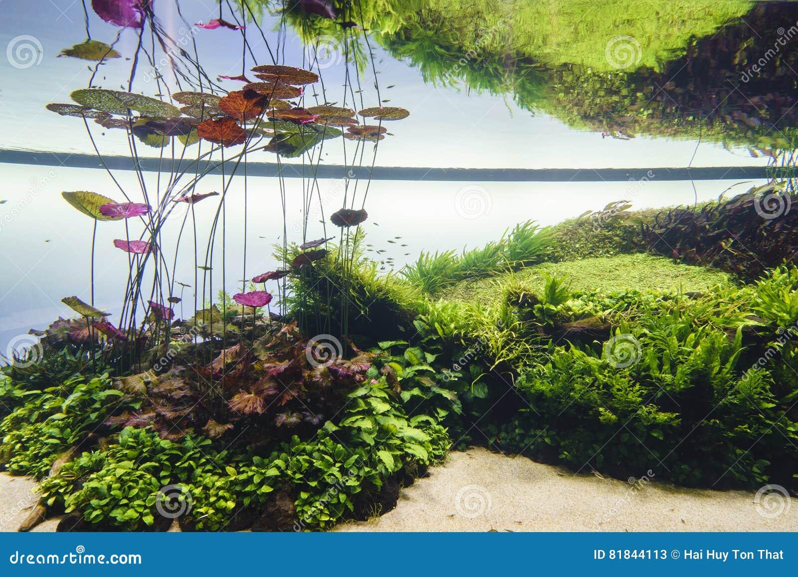 Acuario de agua dulce de la naturaleza en el estilo de Takasi Amano