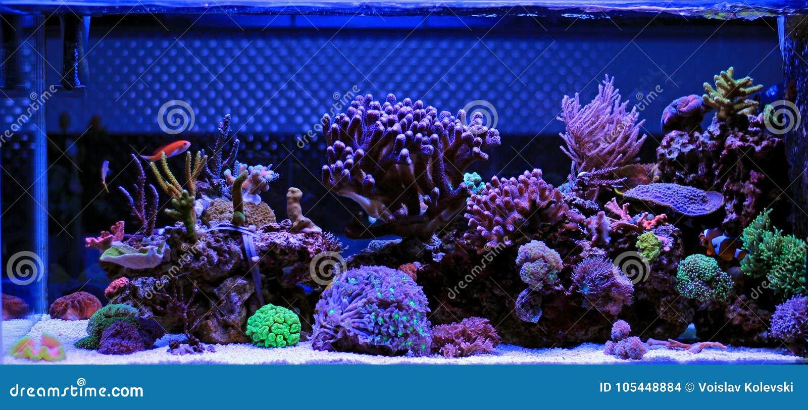 Acuario del agua salada escena del tanque del arrecife de - Acuario en casa ...