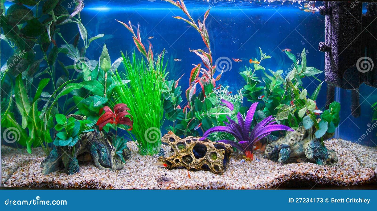 Acuario tropical del tanque de pescados