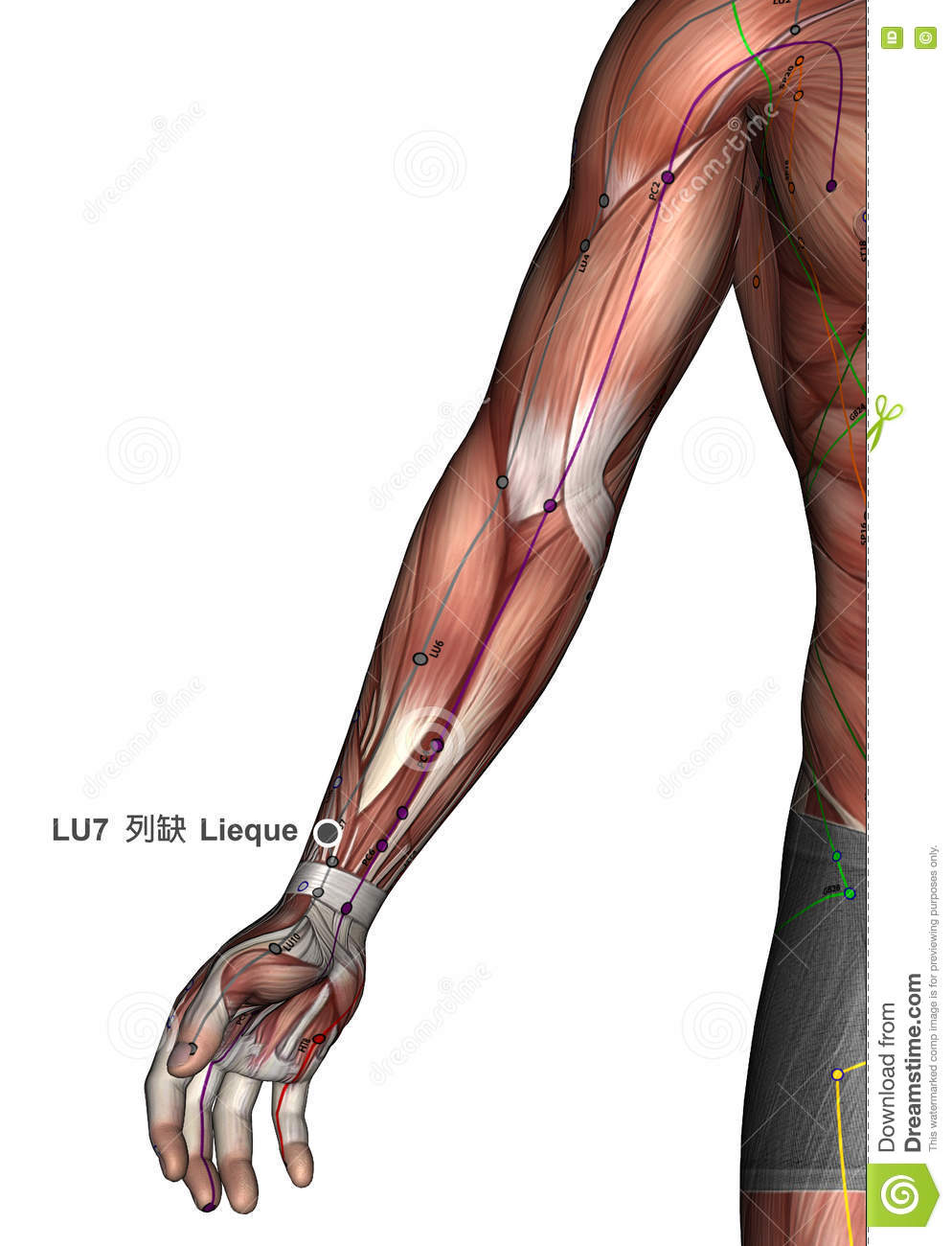 Acupuncture Point LU7 Lieque, 3D Illustration Stock