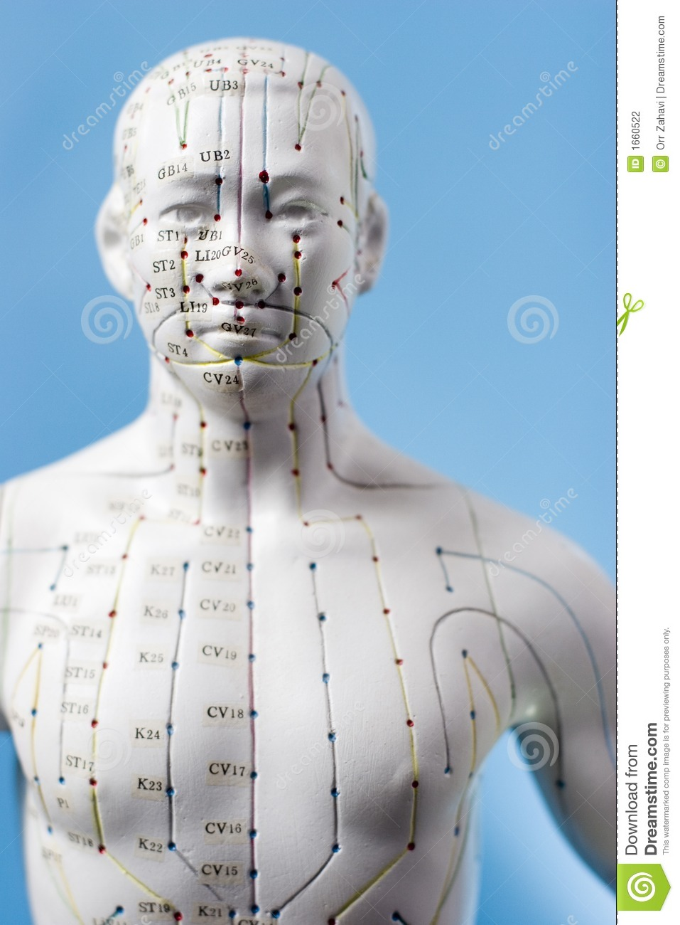 Acupuncture Points Stock Photo Image Of Medicine Body