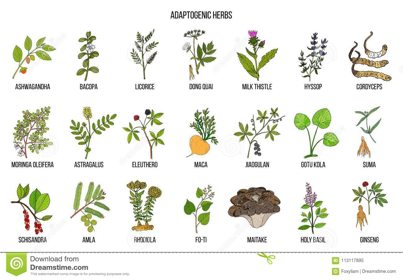 medicinal plants diagram 10 ulrich temme de \u2022medicinal plants diagram best wiring library rh 185 borrel drankjes be indian medicinal plants indian medicinal