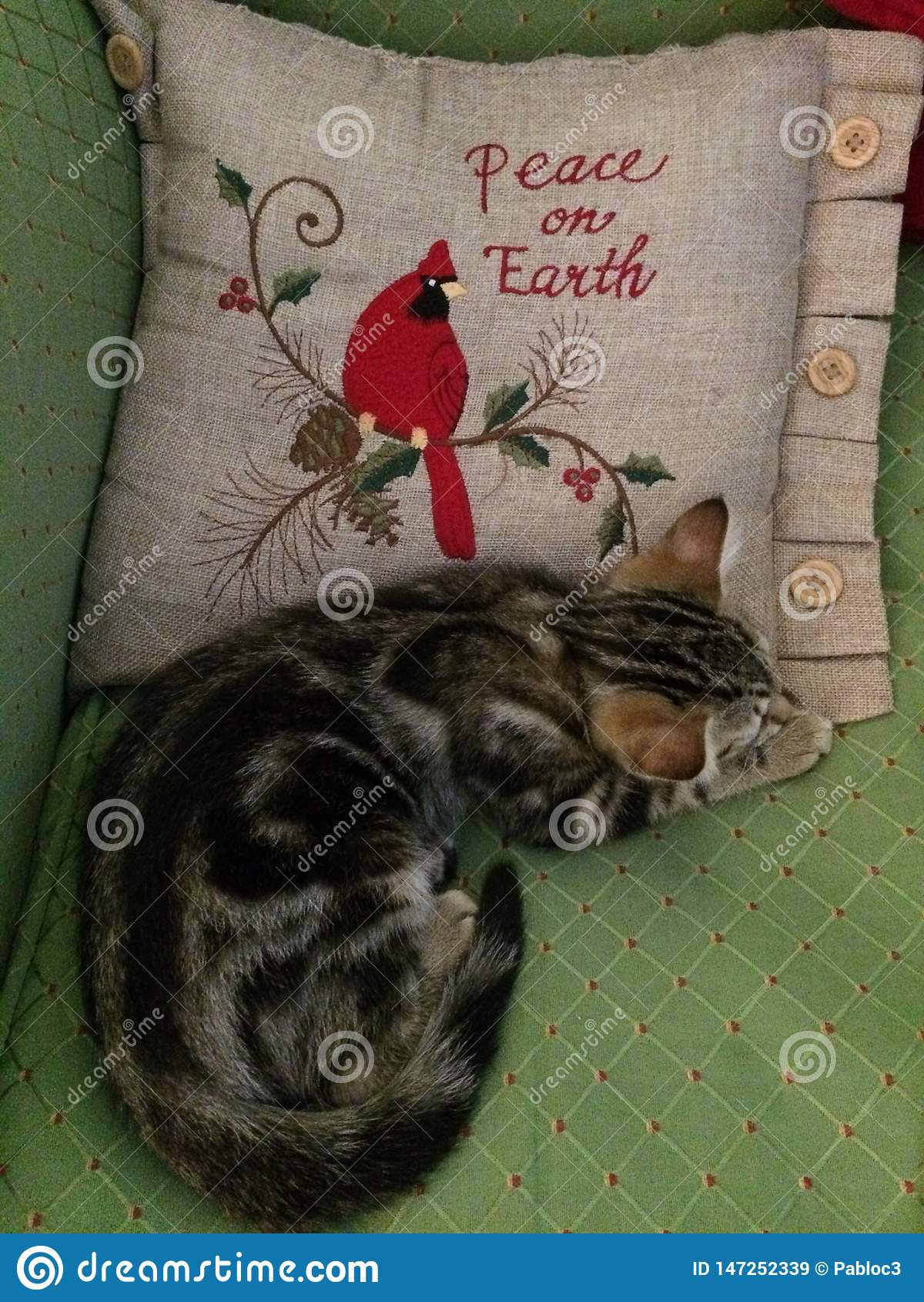 Addie Cat - paz na terra