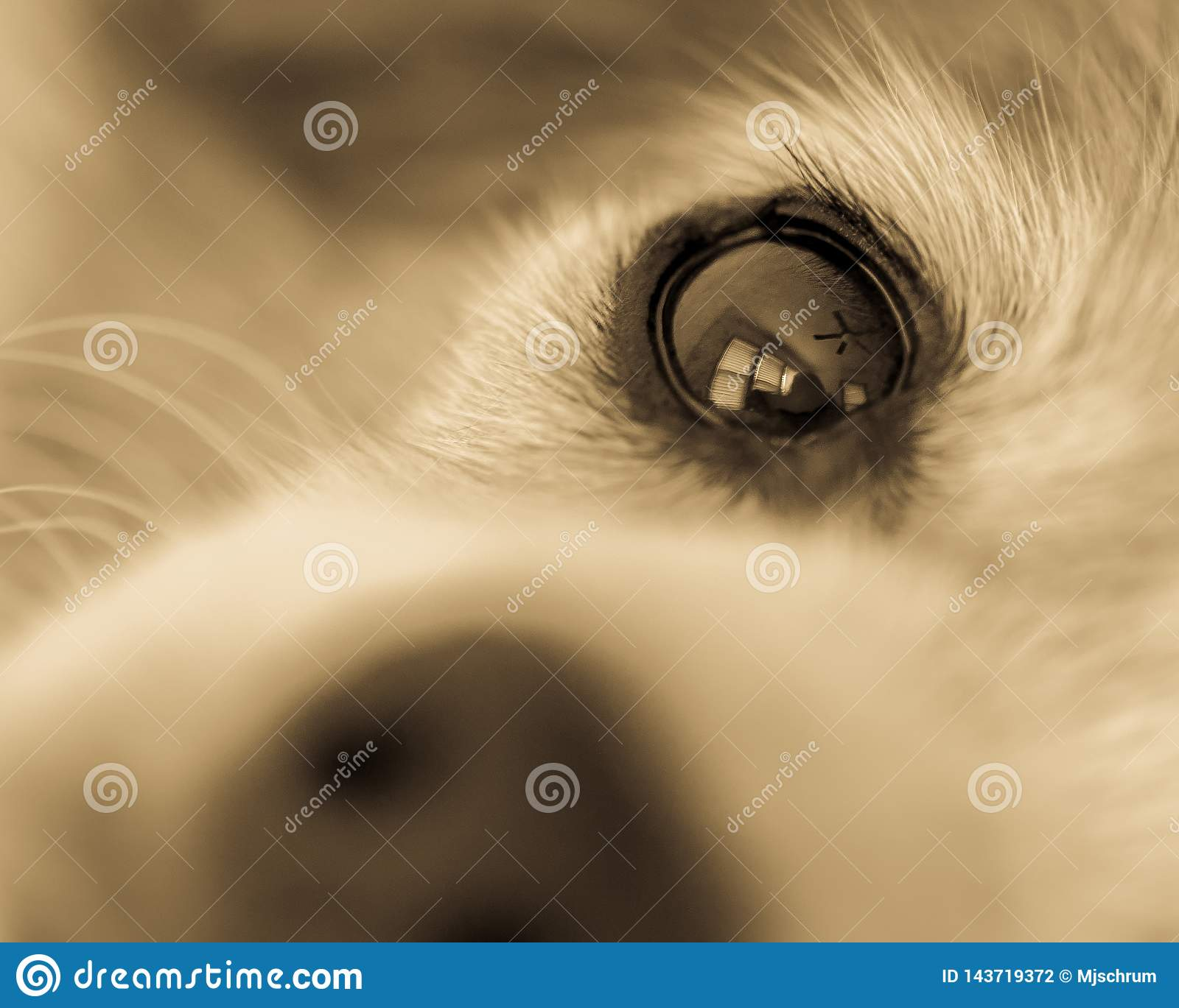 Monochrome close-up of dog`s eye viewed from the nose