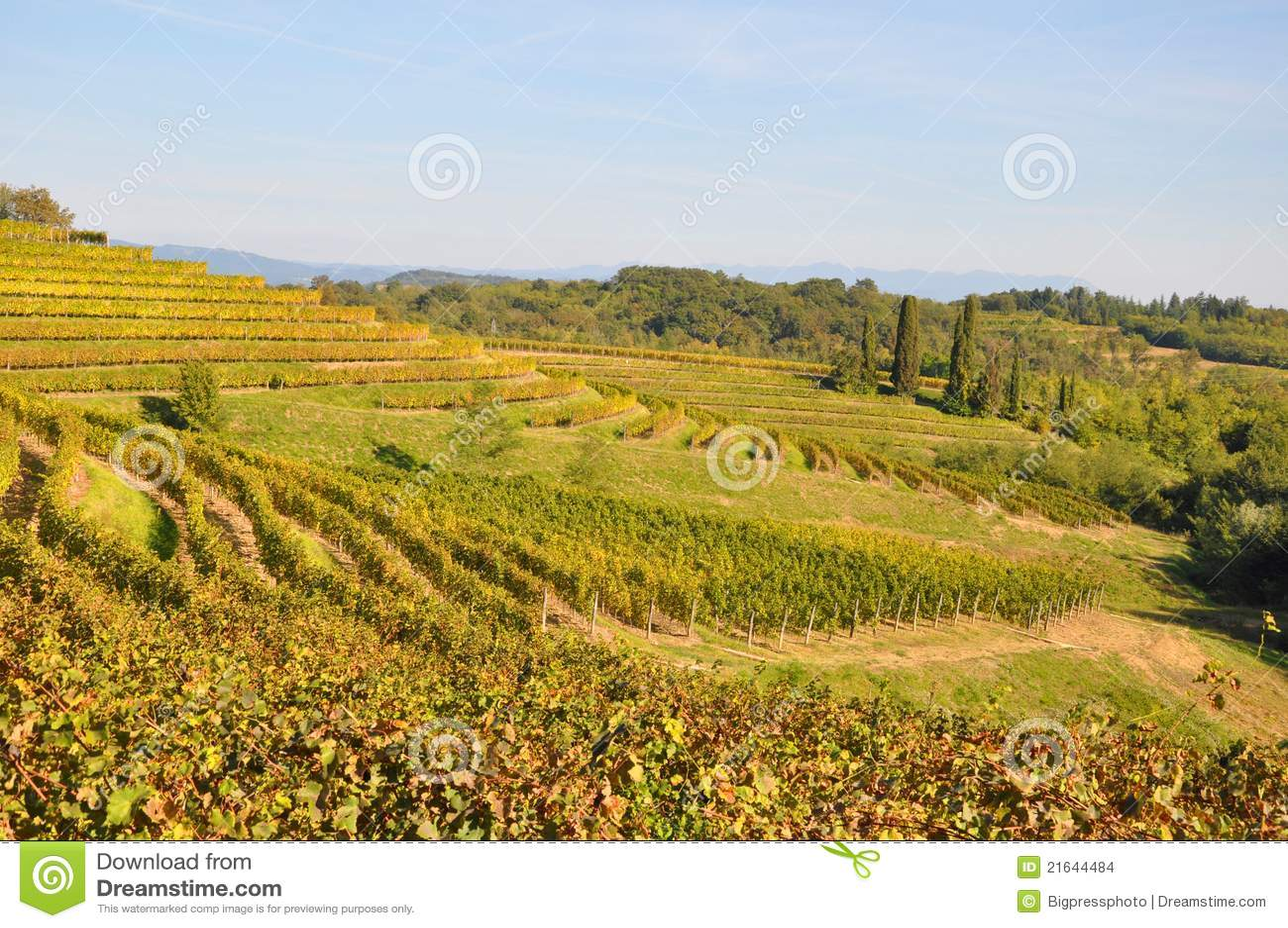 Adega e vinho italy