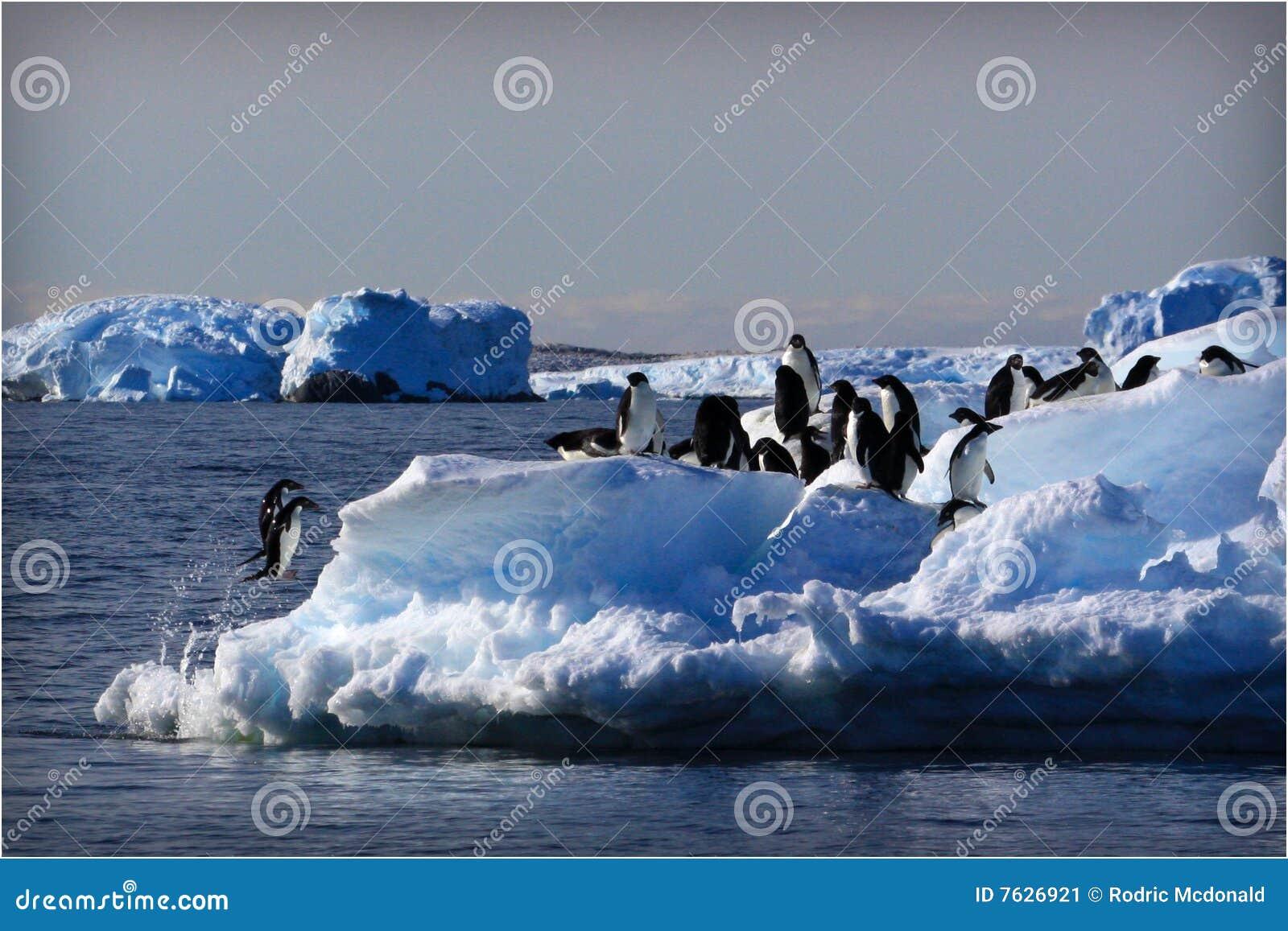 Adele Penguins Jumping