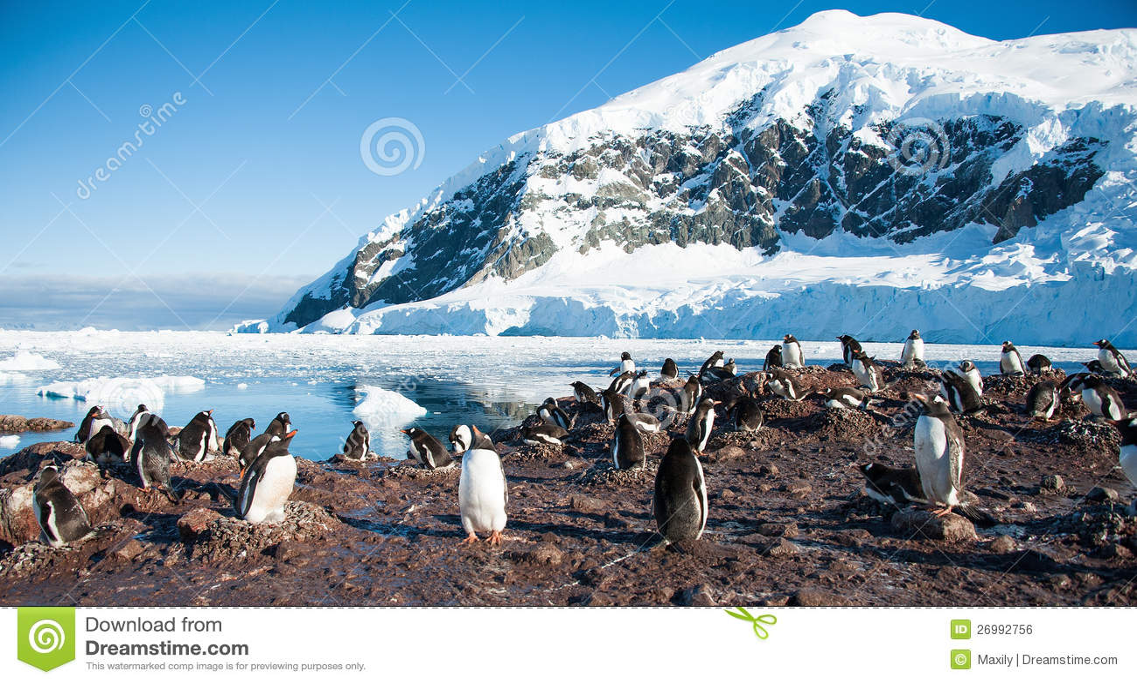 Adelie penguins στην παραλία της Ανταρκτικής