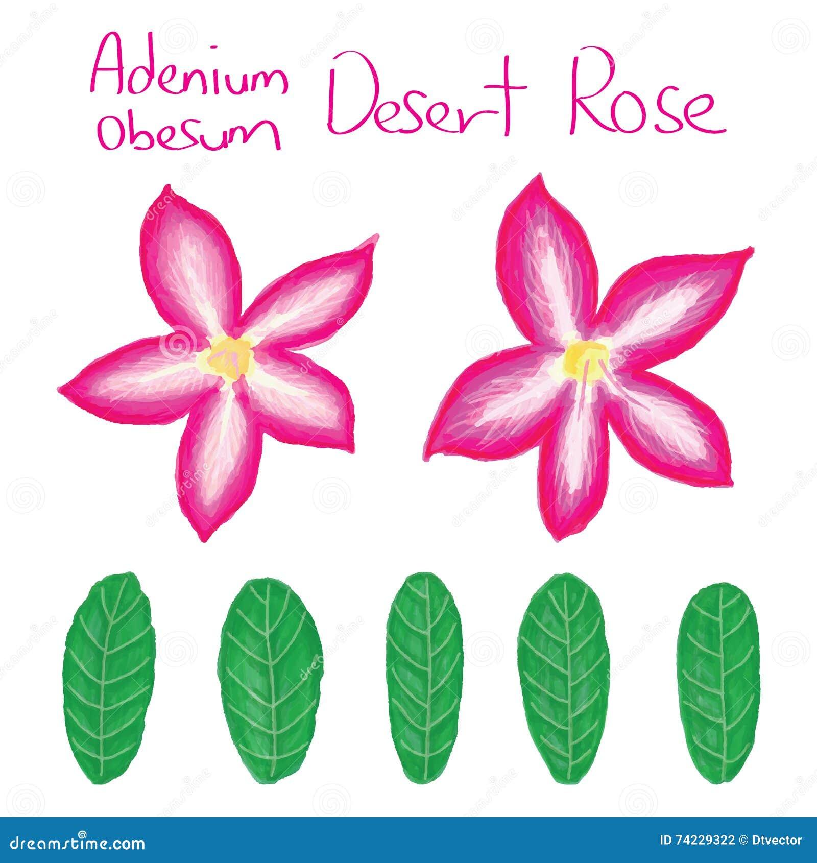 Adenium Obesum set