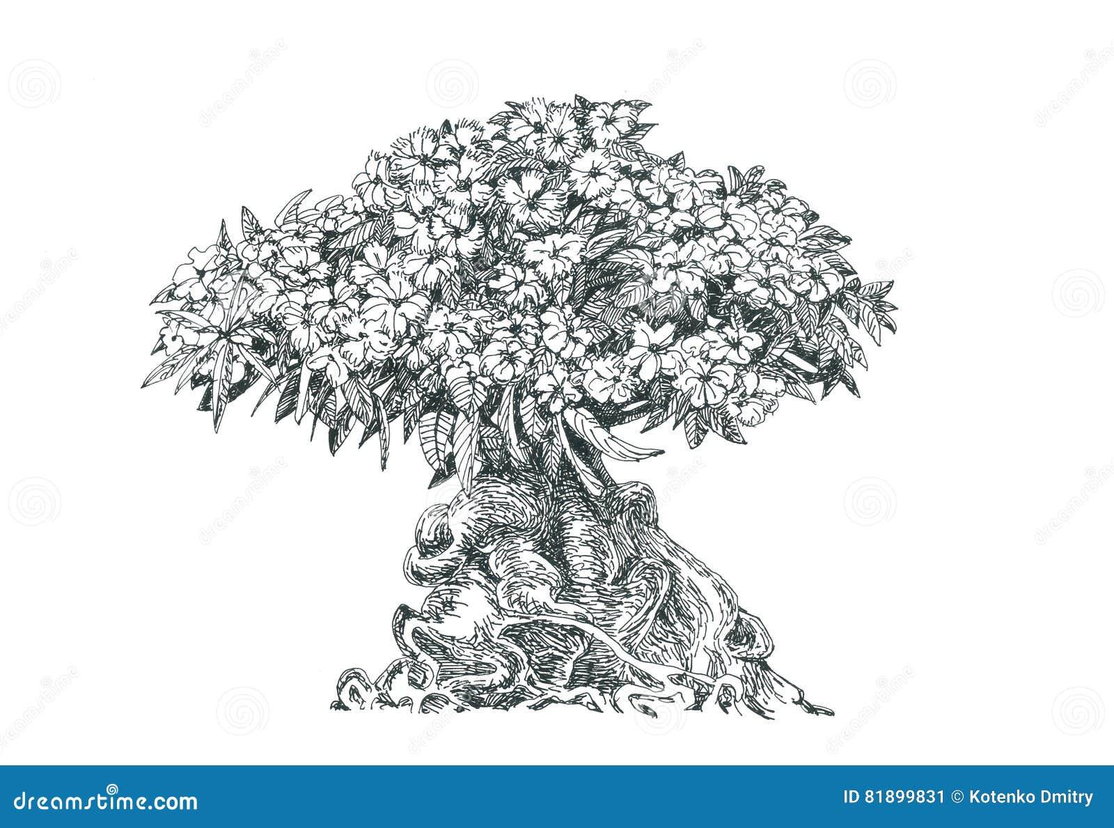 Adenium tree bonsai drawing pen stock illustration - Dessin bonzai ...