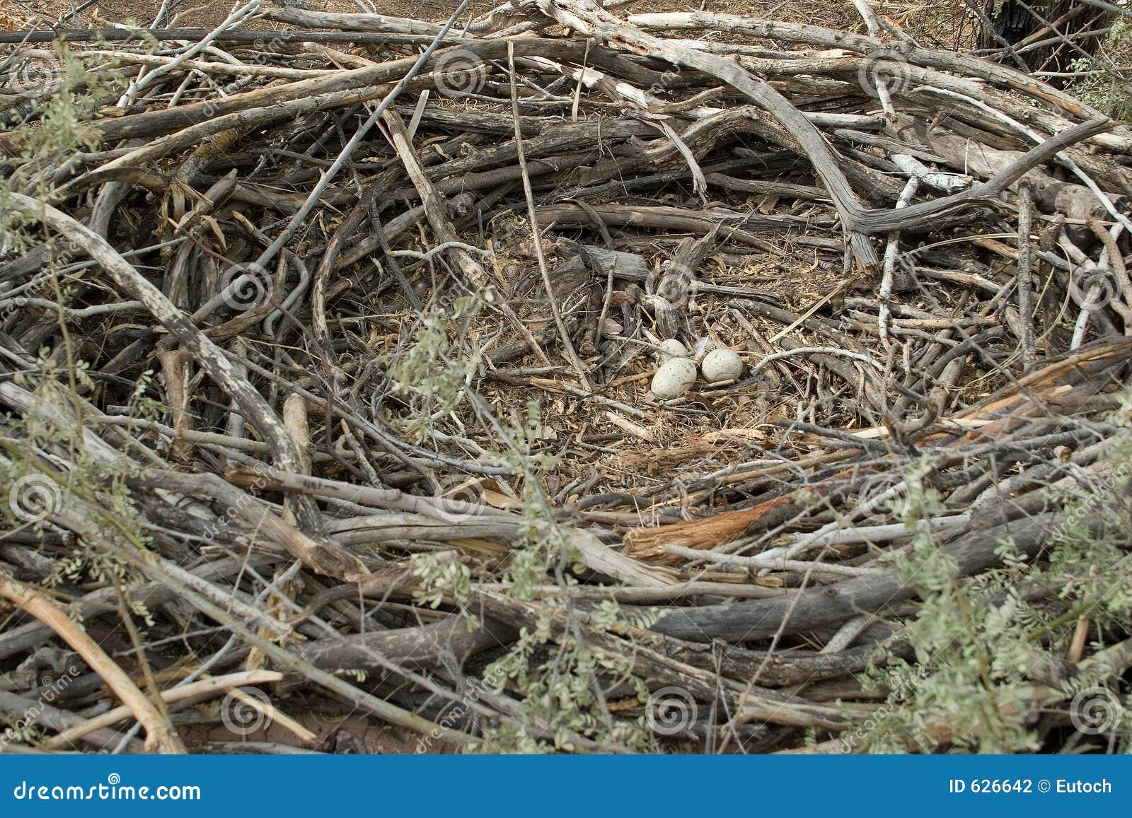 Adler-Nest, vollständiger Kreis