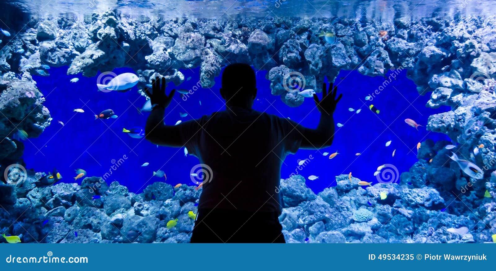 Admirez les poissons de corail