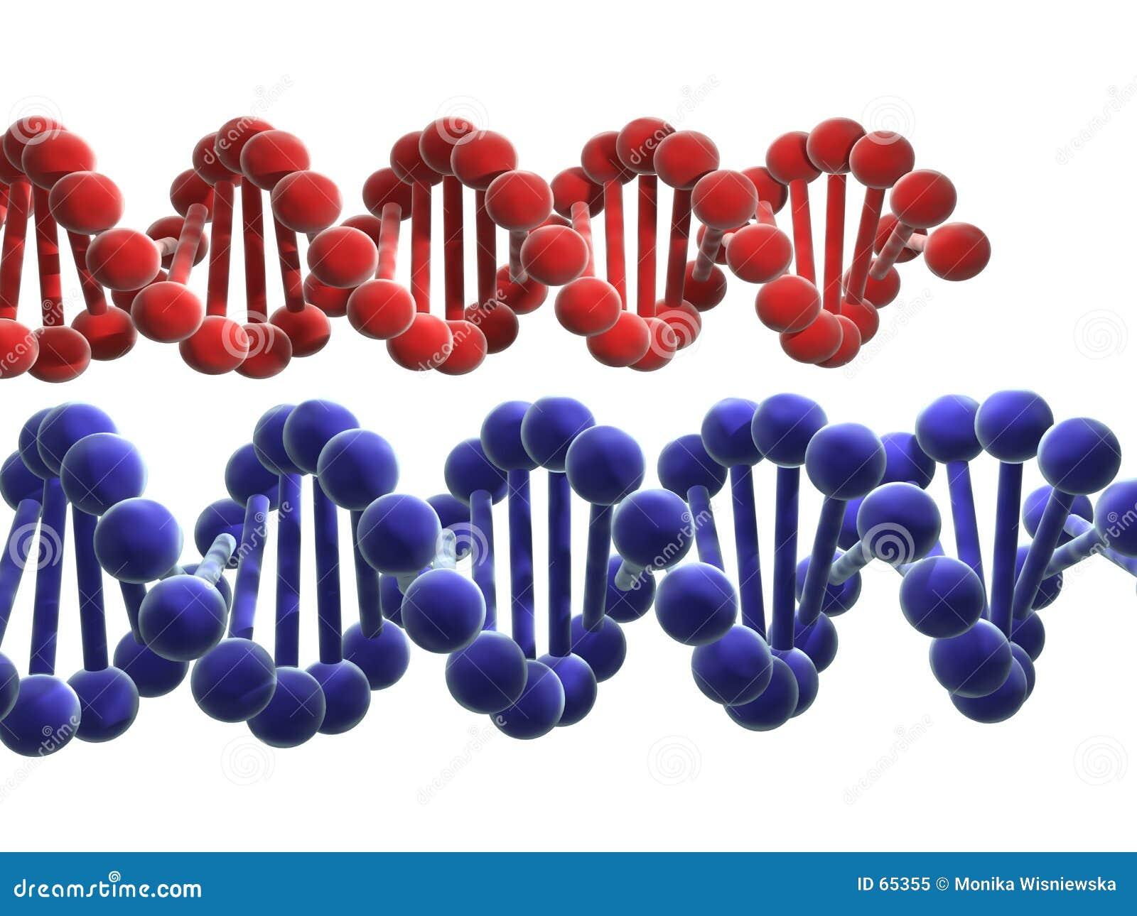 Download ADN illustration stock. Illustration du origines, brin, isolement - 65355