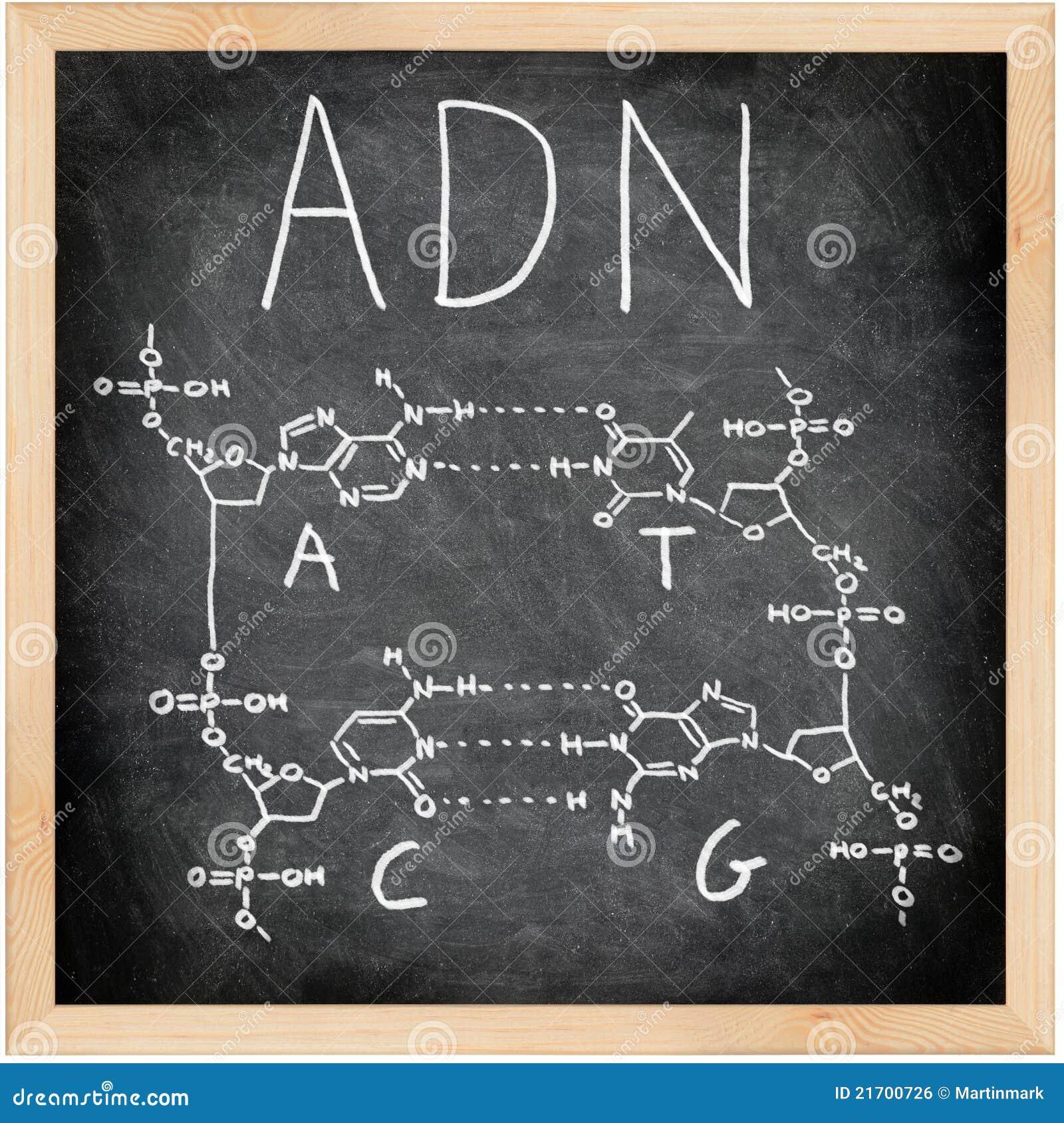 ADN - DNA en español, francés y portugués.