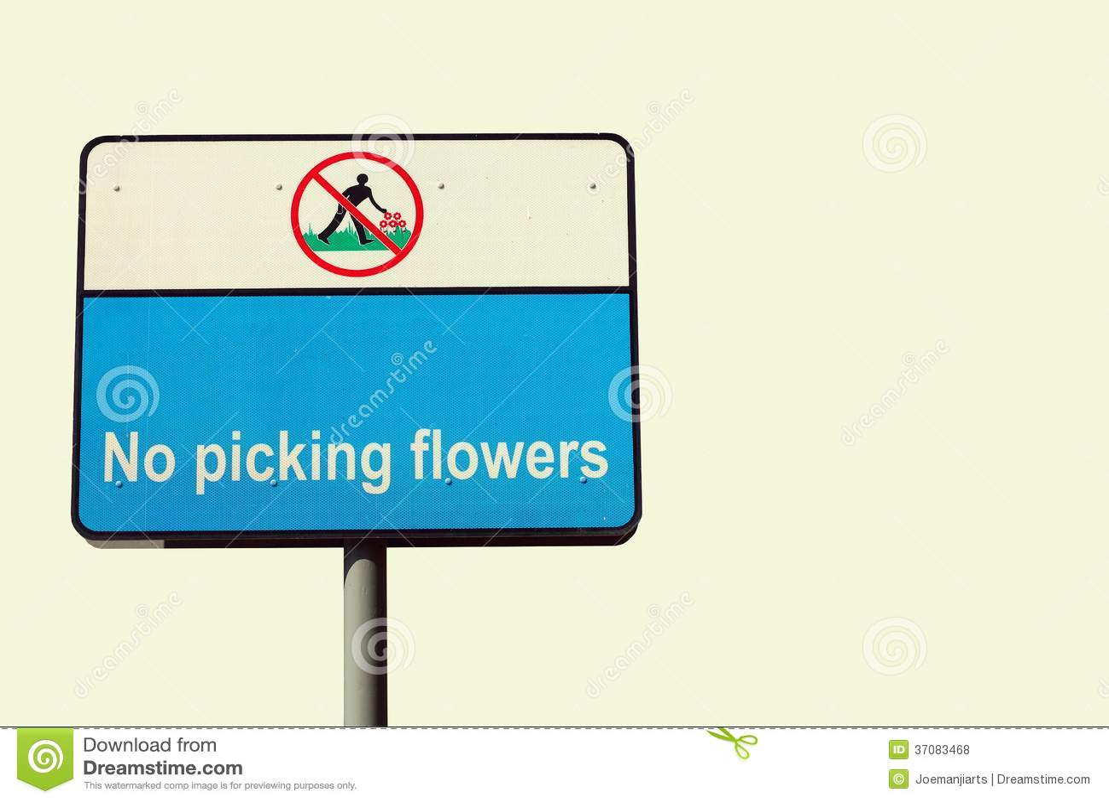 Download Żadny zrywanie kwiaty zdjęcie stock. Obraz złożonej z ro - 37083468