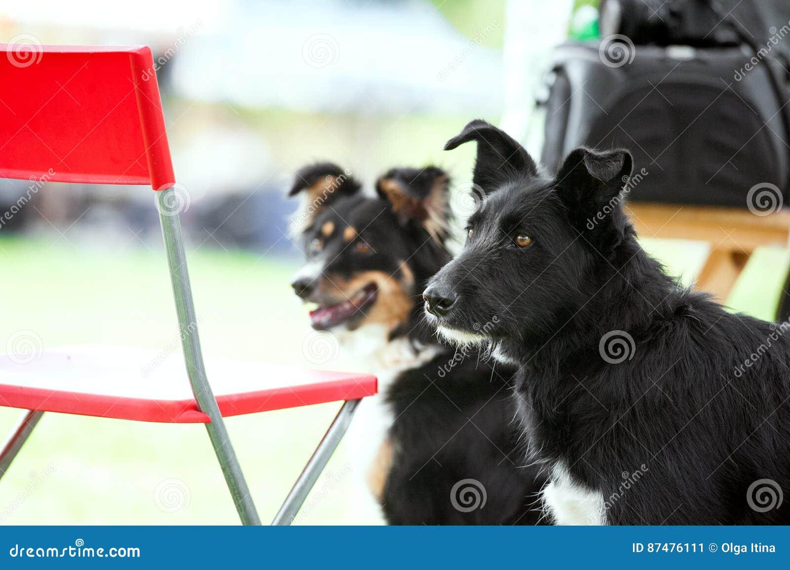 2 adoptable собаки outdoors