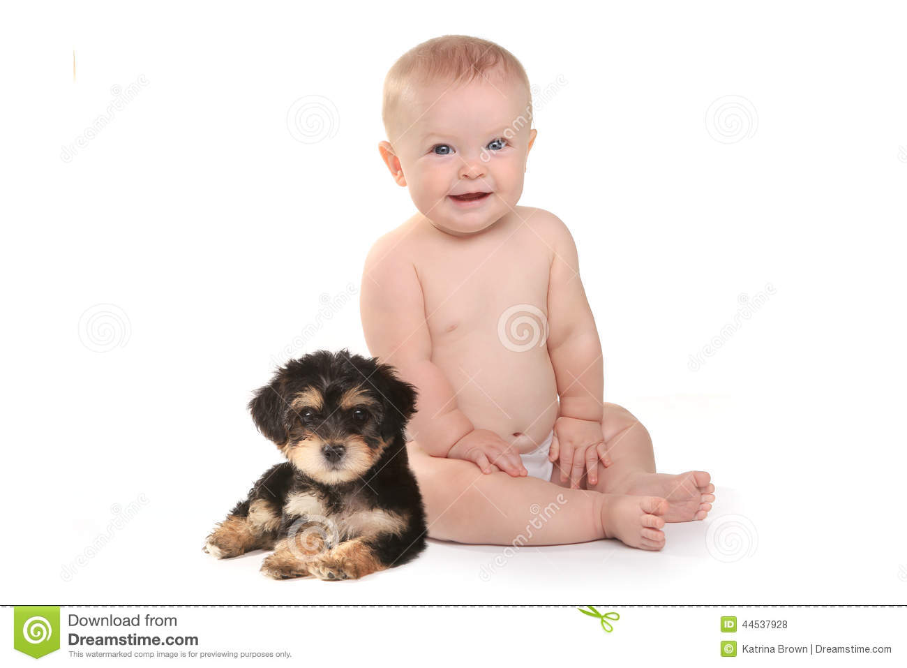 812 Teacup Puppy Photos Free Royalty Free Stock Photos From Dreamstime