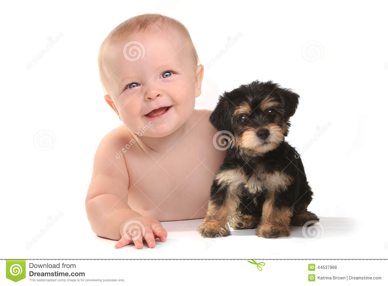 Adorable Baby Boy With His Pet Teacup Yorkie Puppy Stock Photo - Image ...