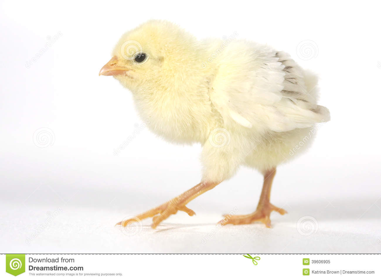Adorable Baby Chick Chicken On White Background Stock Photo - Image ...