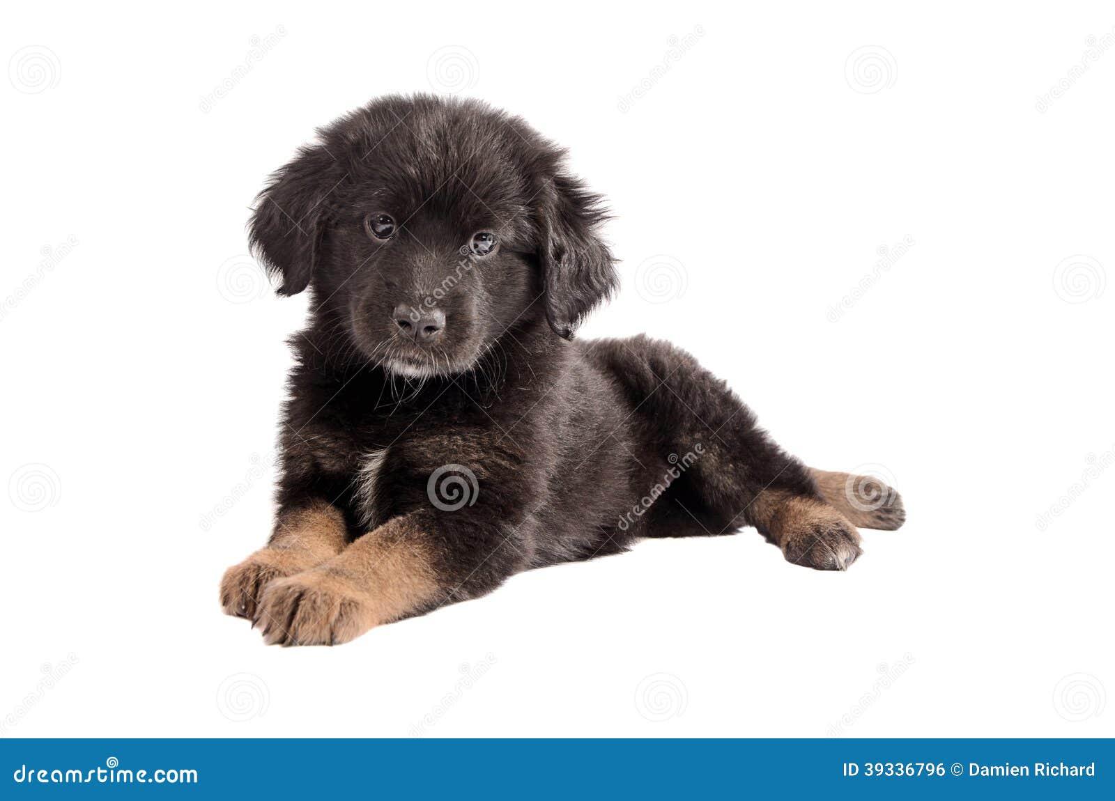Black Fluffy Puppy | www.pixshark.com - Images Galleries ...