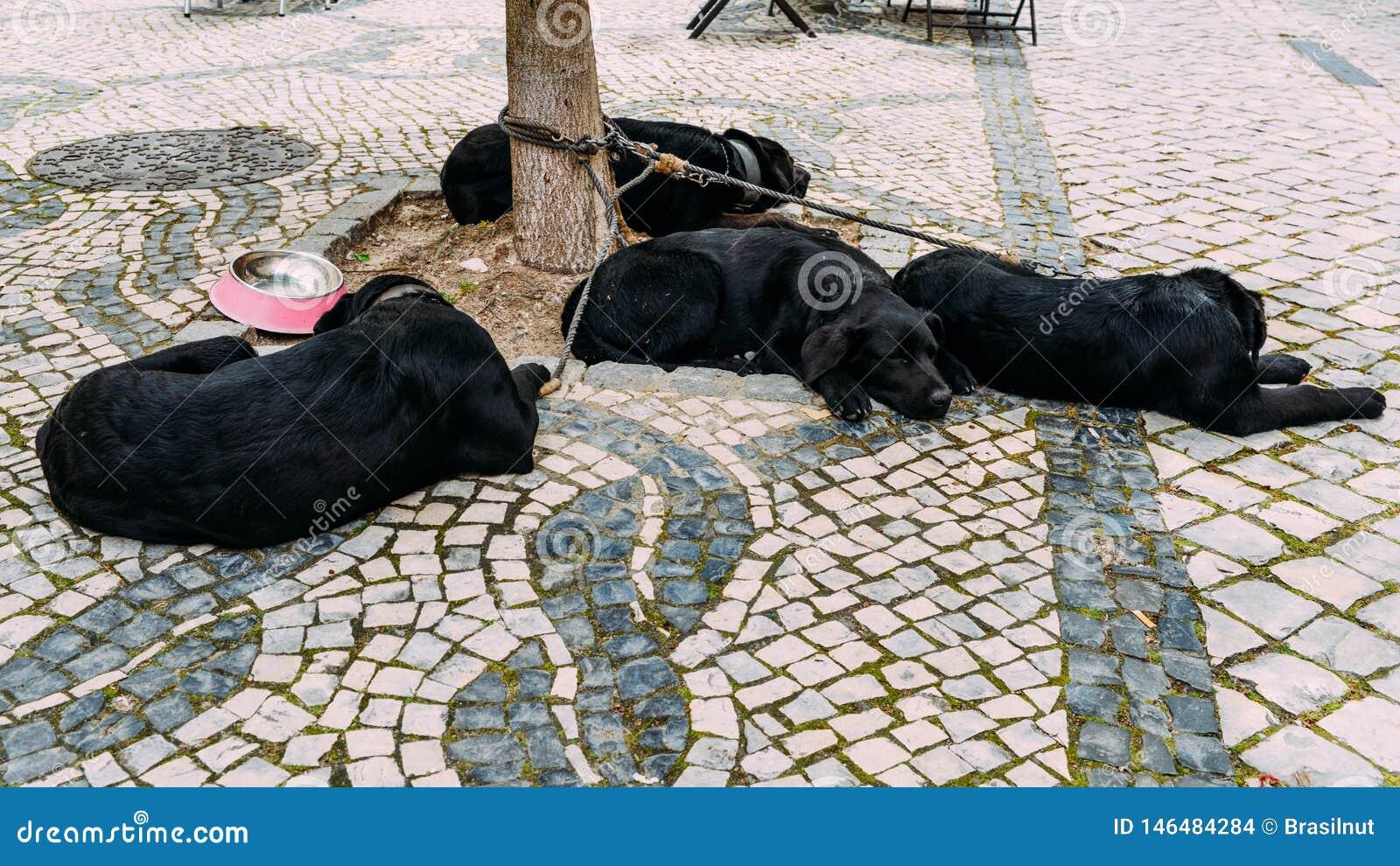 10,10 Dogs Asleep Photos   Free & Royalty Free Stock Photos from ...