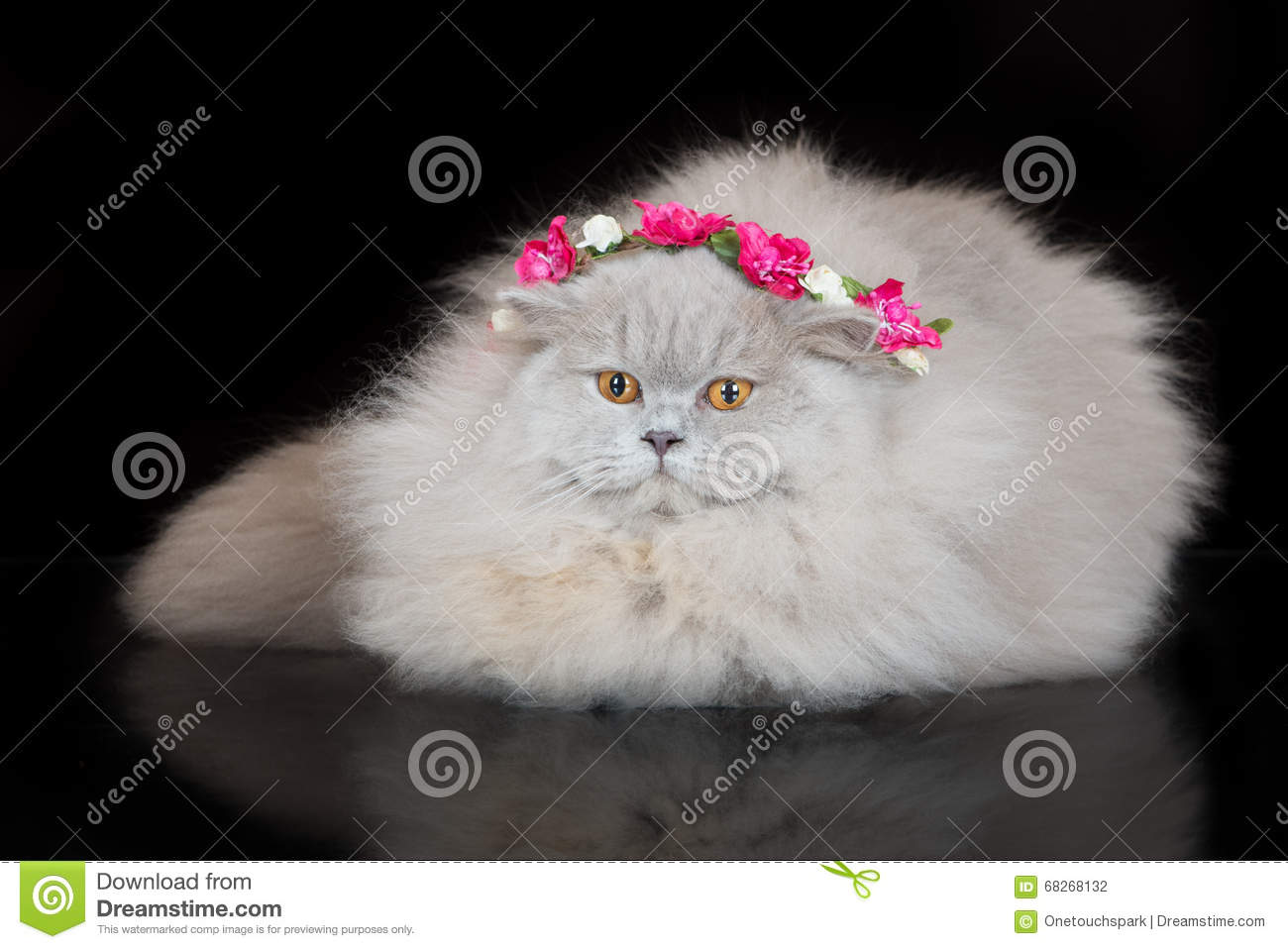 Adorable British Longhair Cat In A Flower Crown Stock Photo Image