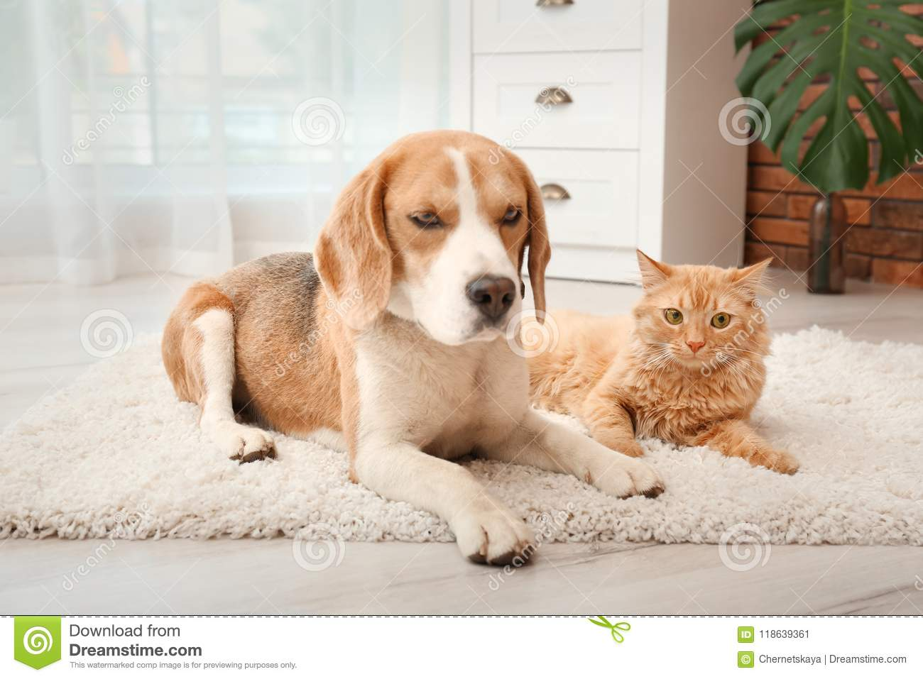 Adorable cat and dog lying on rug at home.